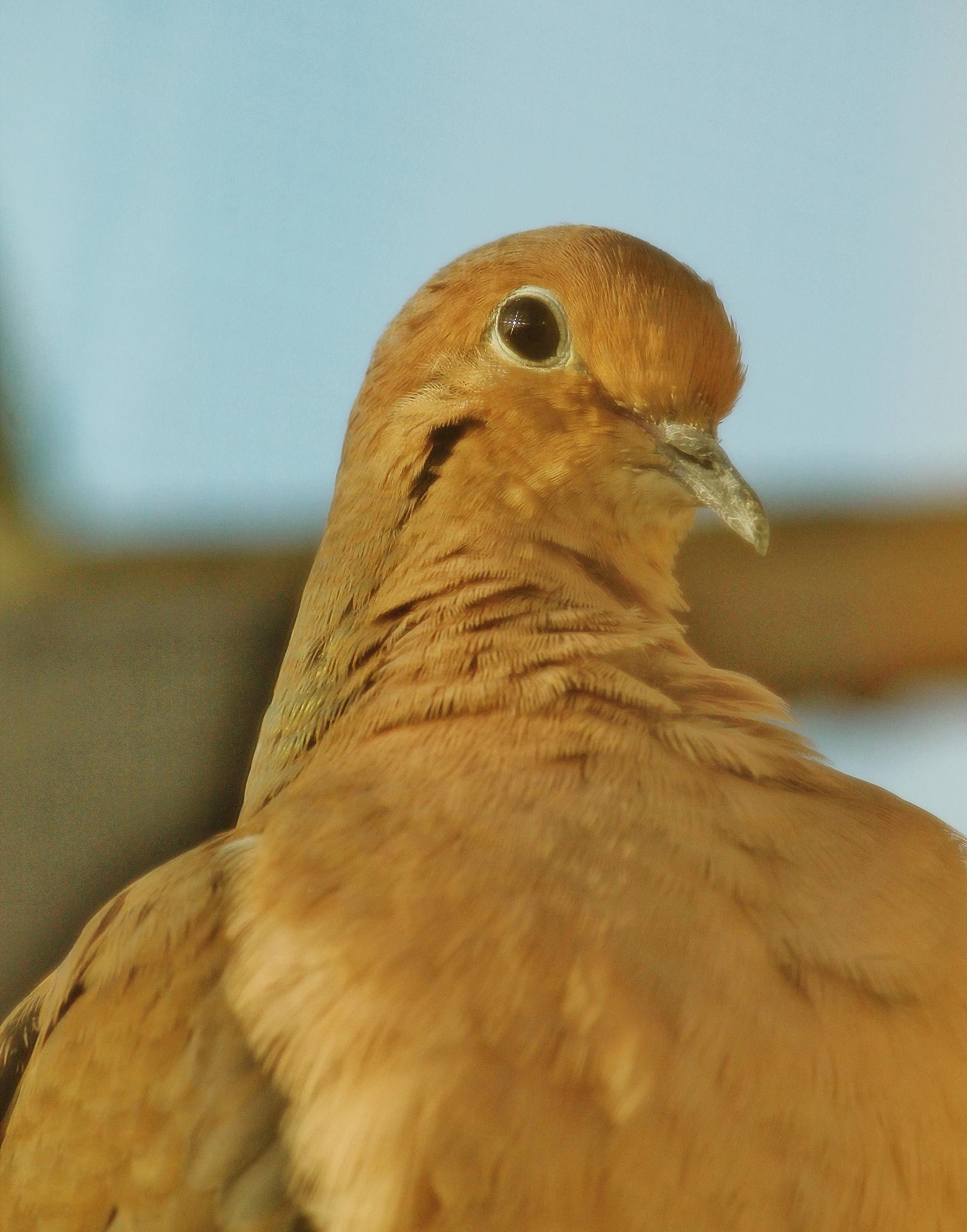 Morning bird on my fire escape,, by Liborio Drogo