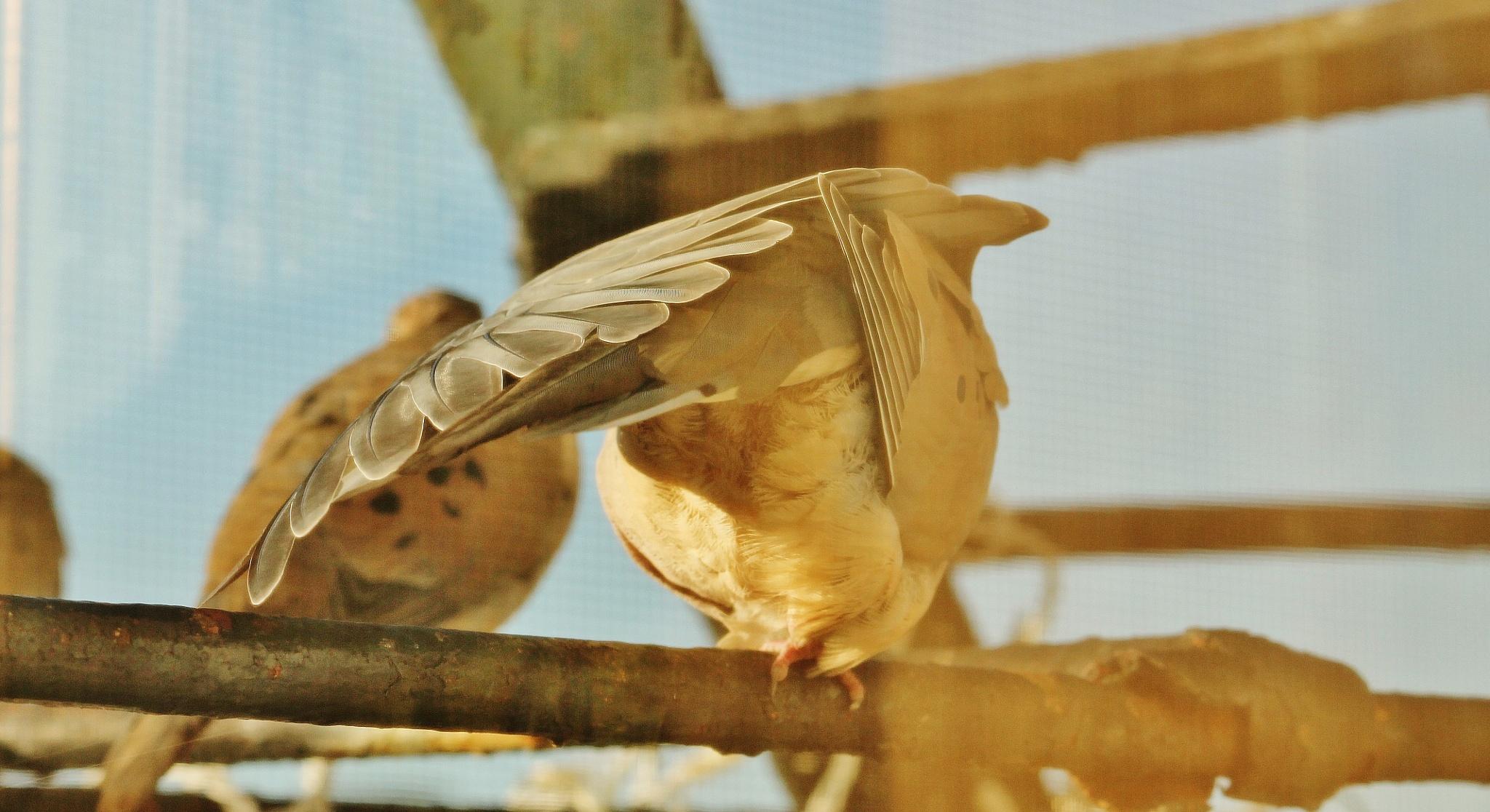 Morning birds on my fire escape,, by Liborio Drogo