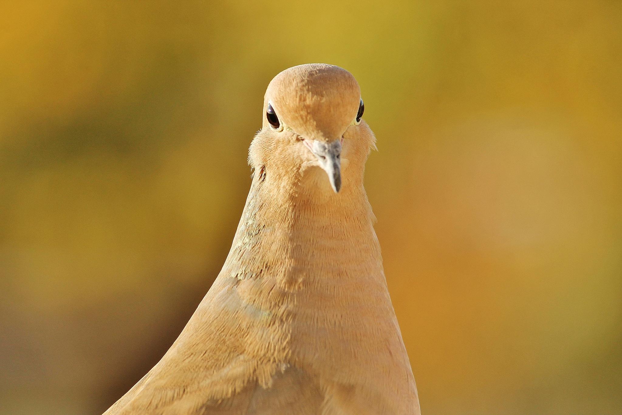 Morning bird , by Liborio Drogo