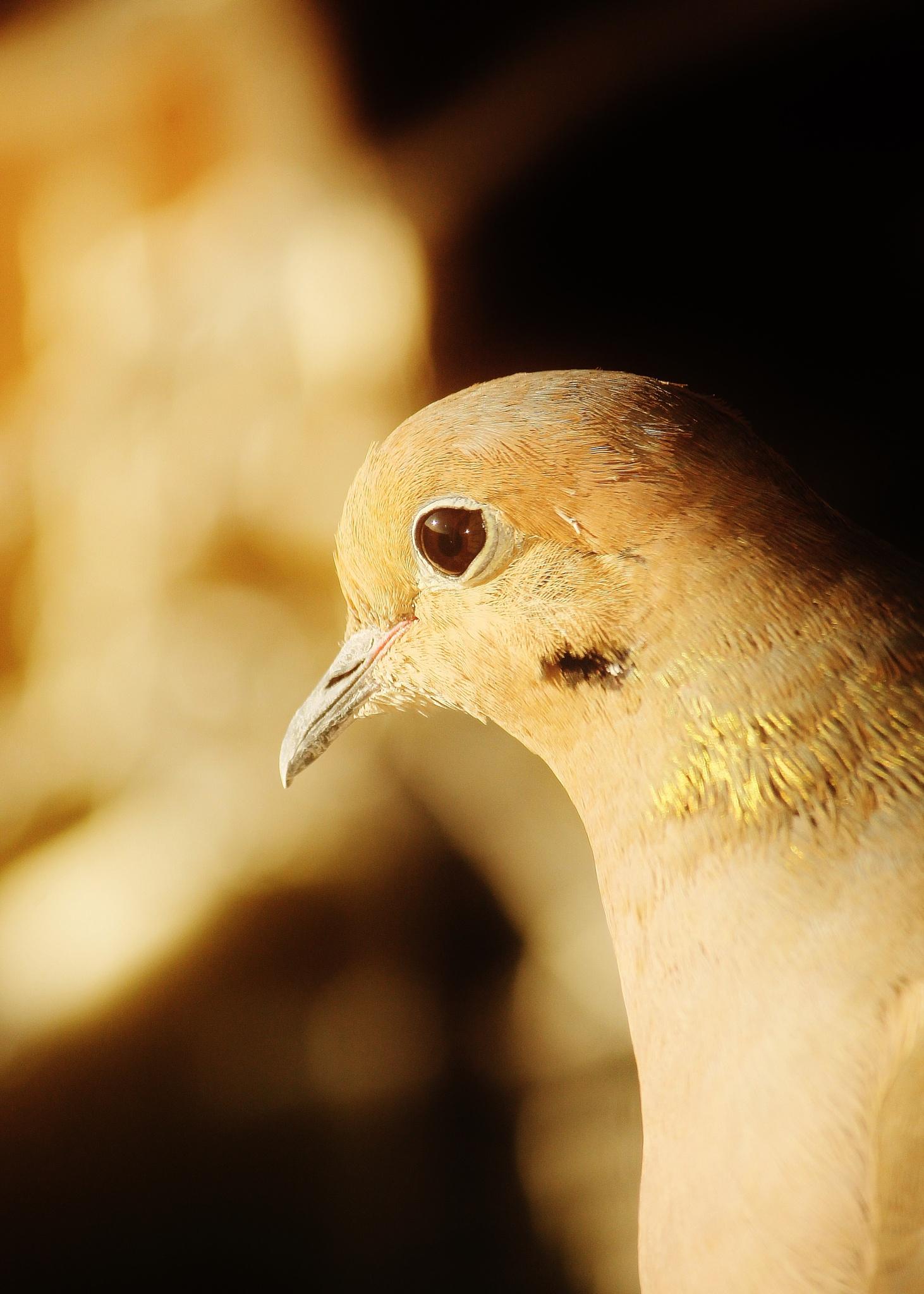 Morning bird, by Liborio Drogo