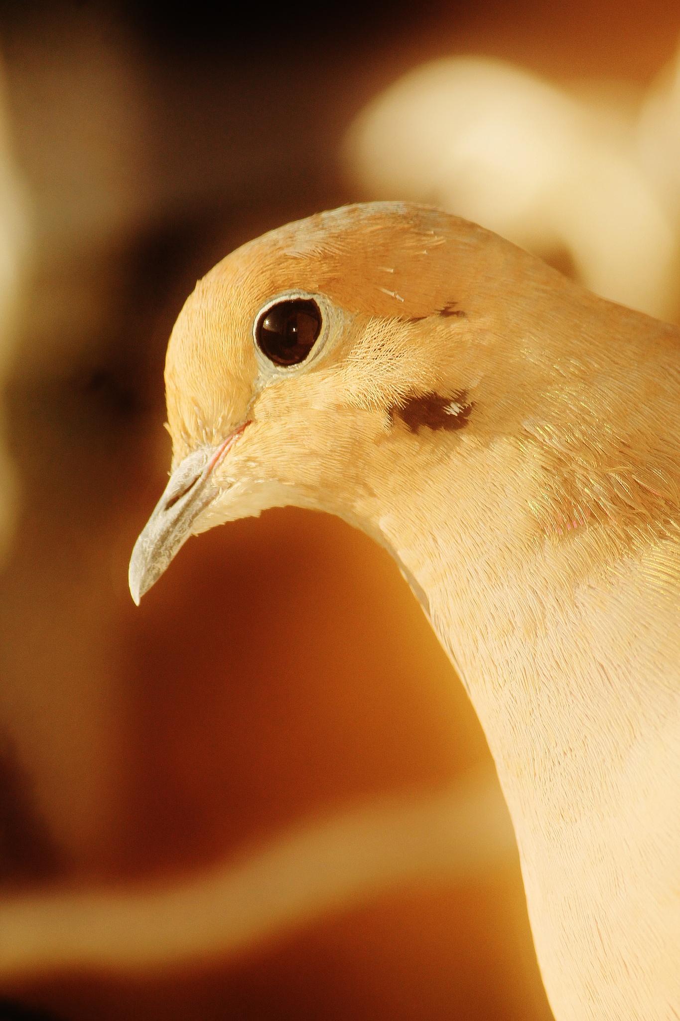 Morning bird,, by Liborio Drogo