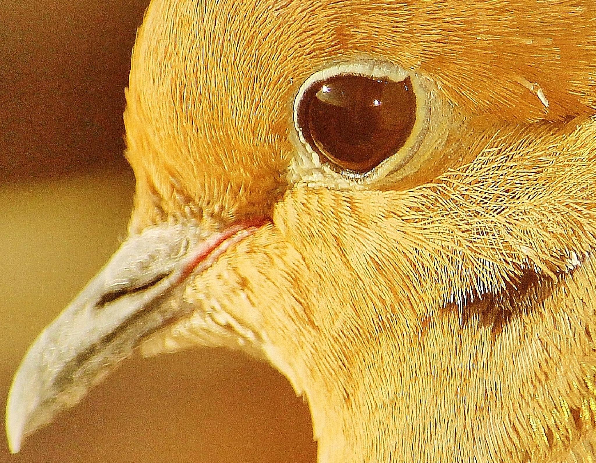 Morning  Bird's eye,, by Liborio Drogo