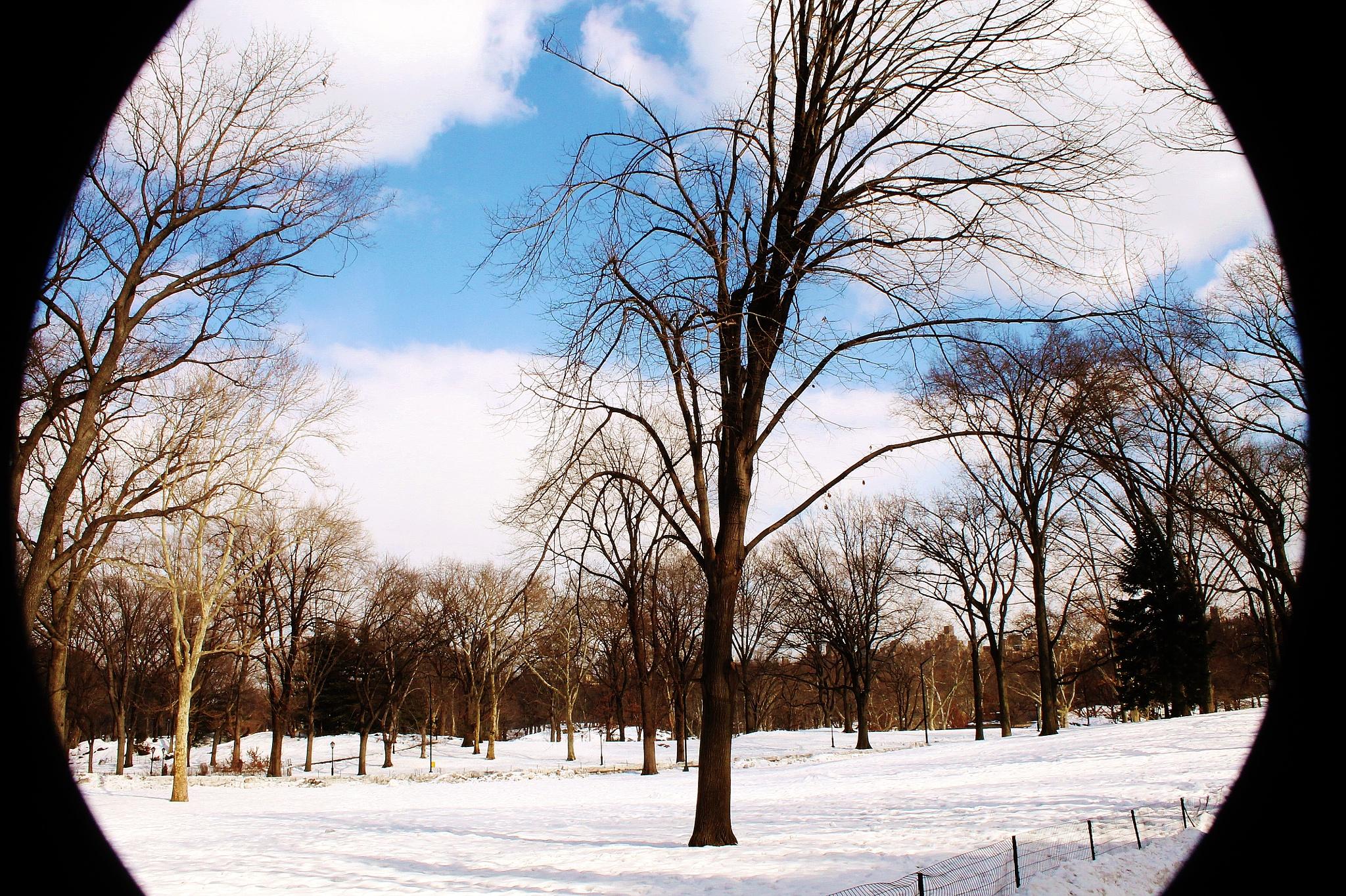 Central Park by Liborio Drogo