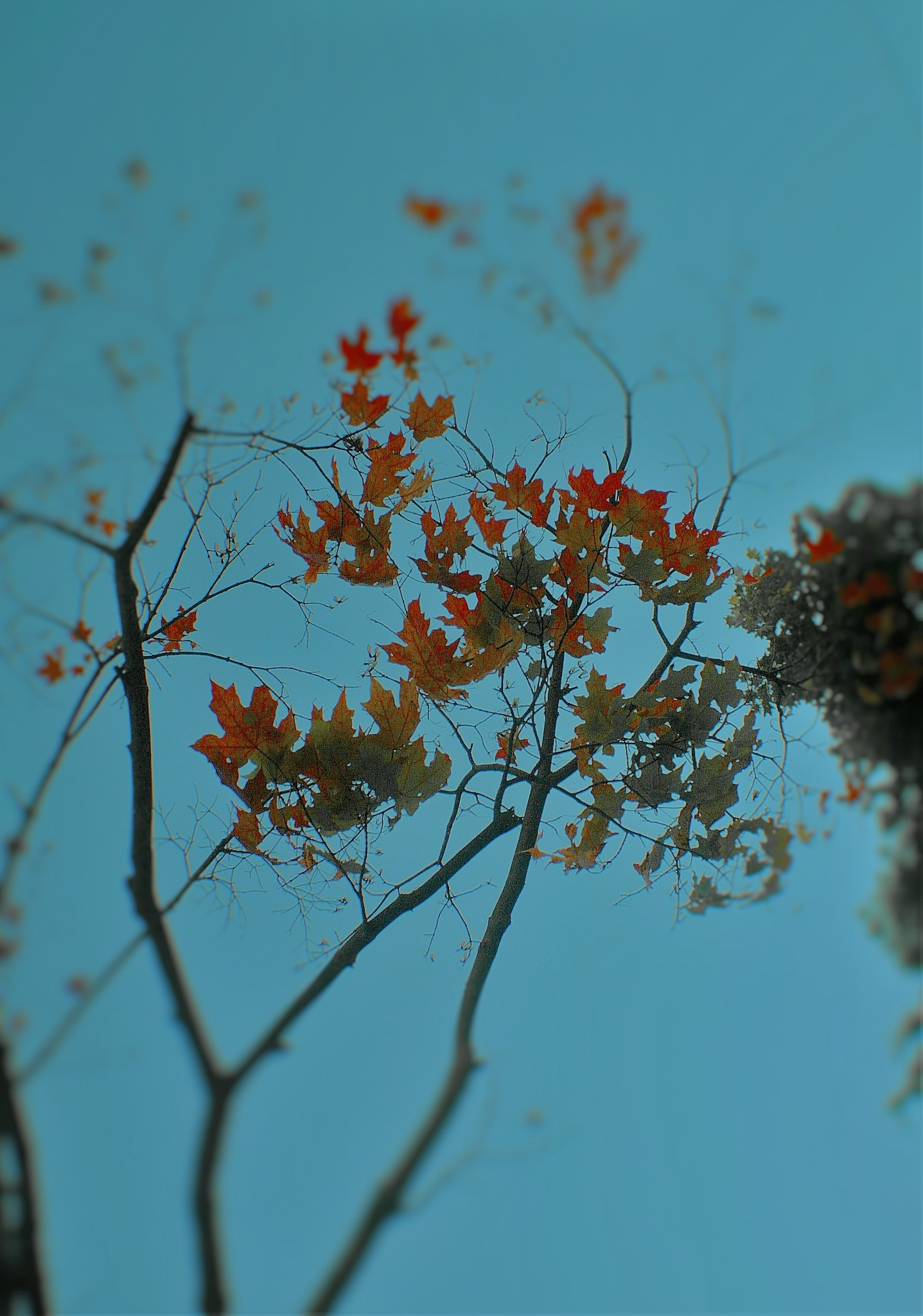 The fall leaves and the blue sky  by Liborio Drogo
