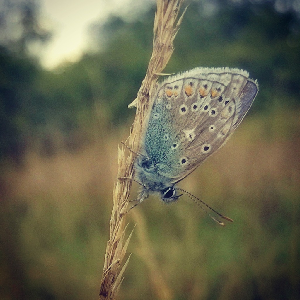 blue butterfly by lauramoo0601