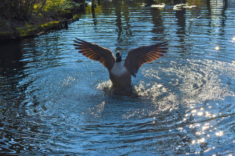 take flight by Alex Gibson