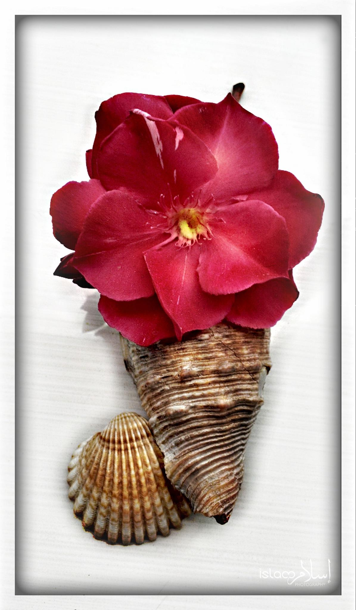 Seashells and a Flower.  by Islam Djellal