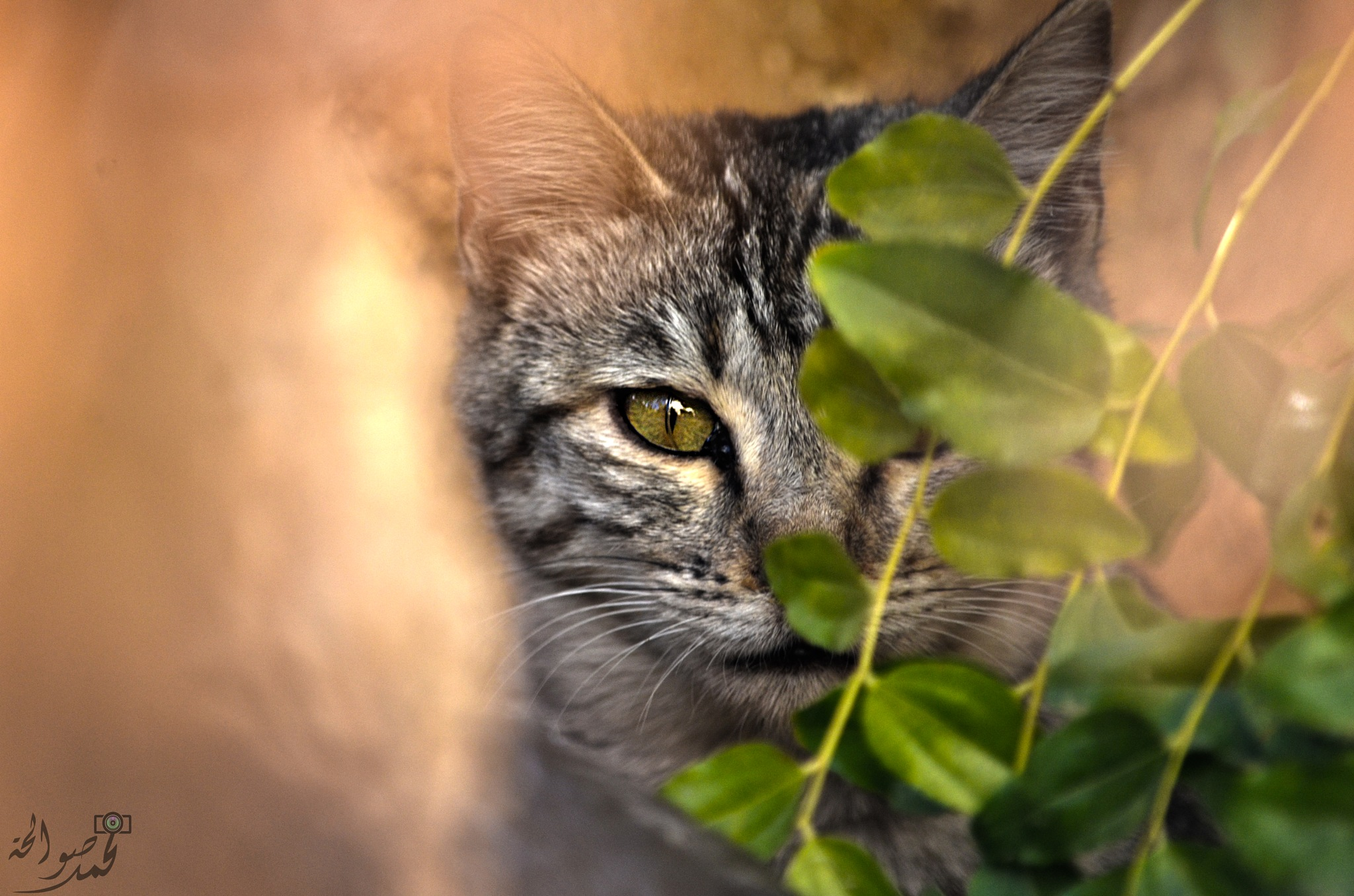 I can see you  by Mohammad Sawalha