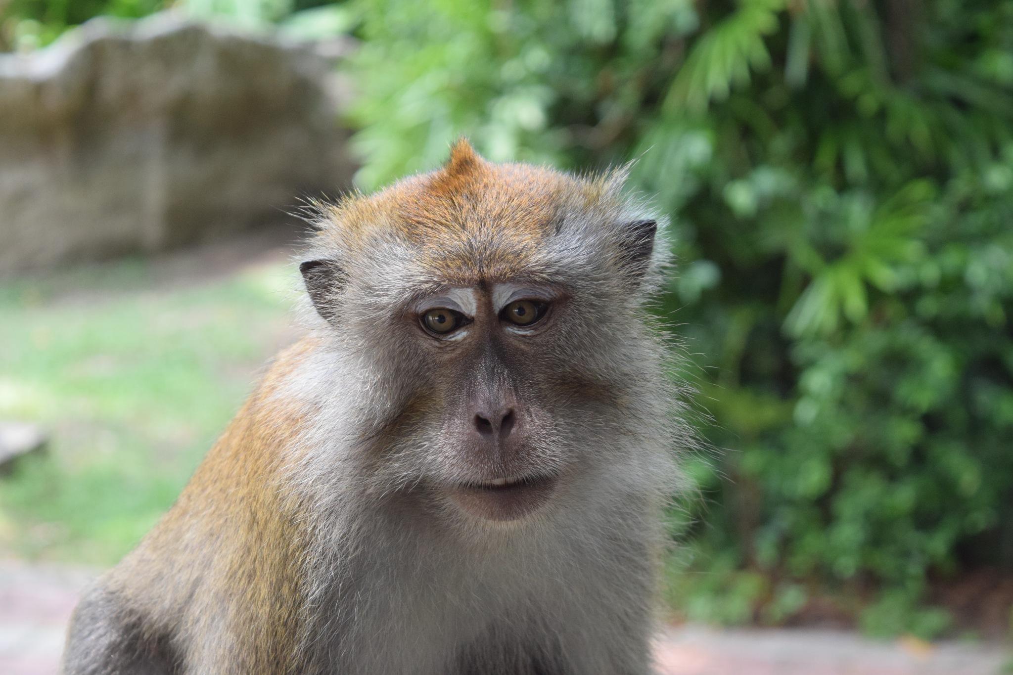 Deceptive Monkey by Jason Murphy