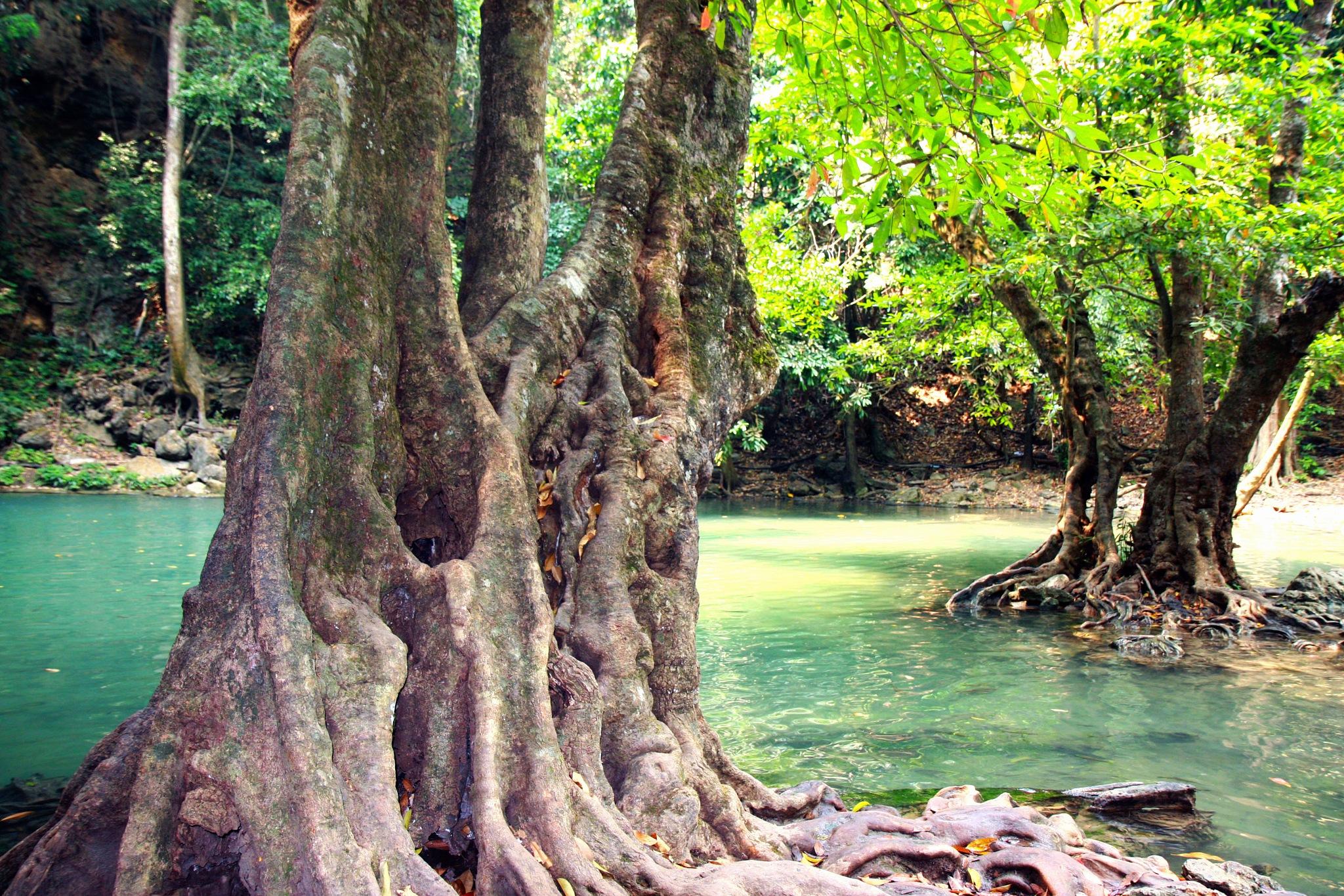 Erawan Falls Kanchanaburi, Thailand by Wendy Farrington