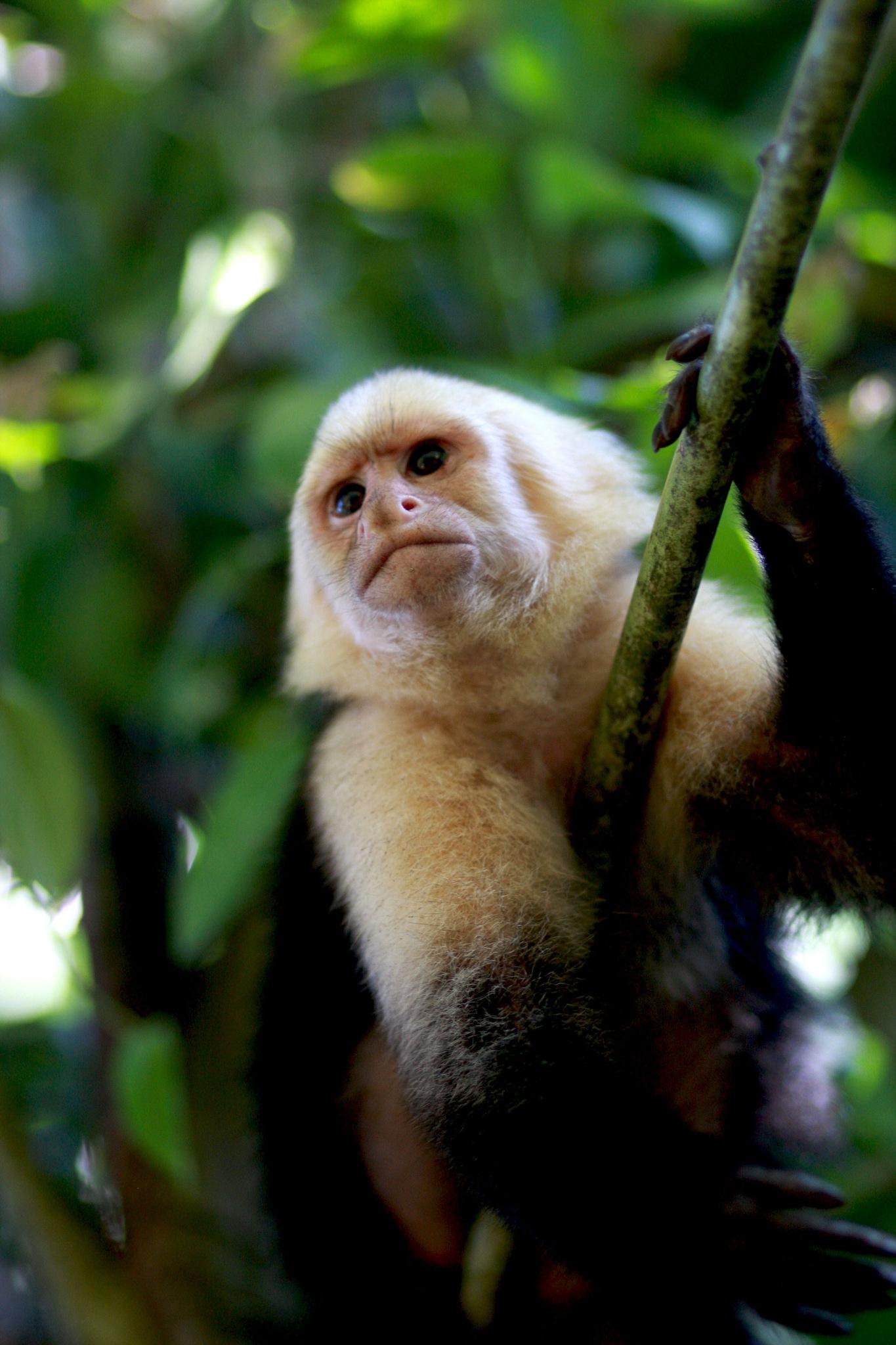 Monkey Guy by Wendy Farrington