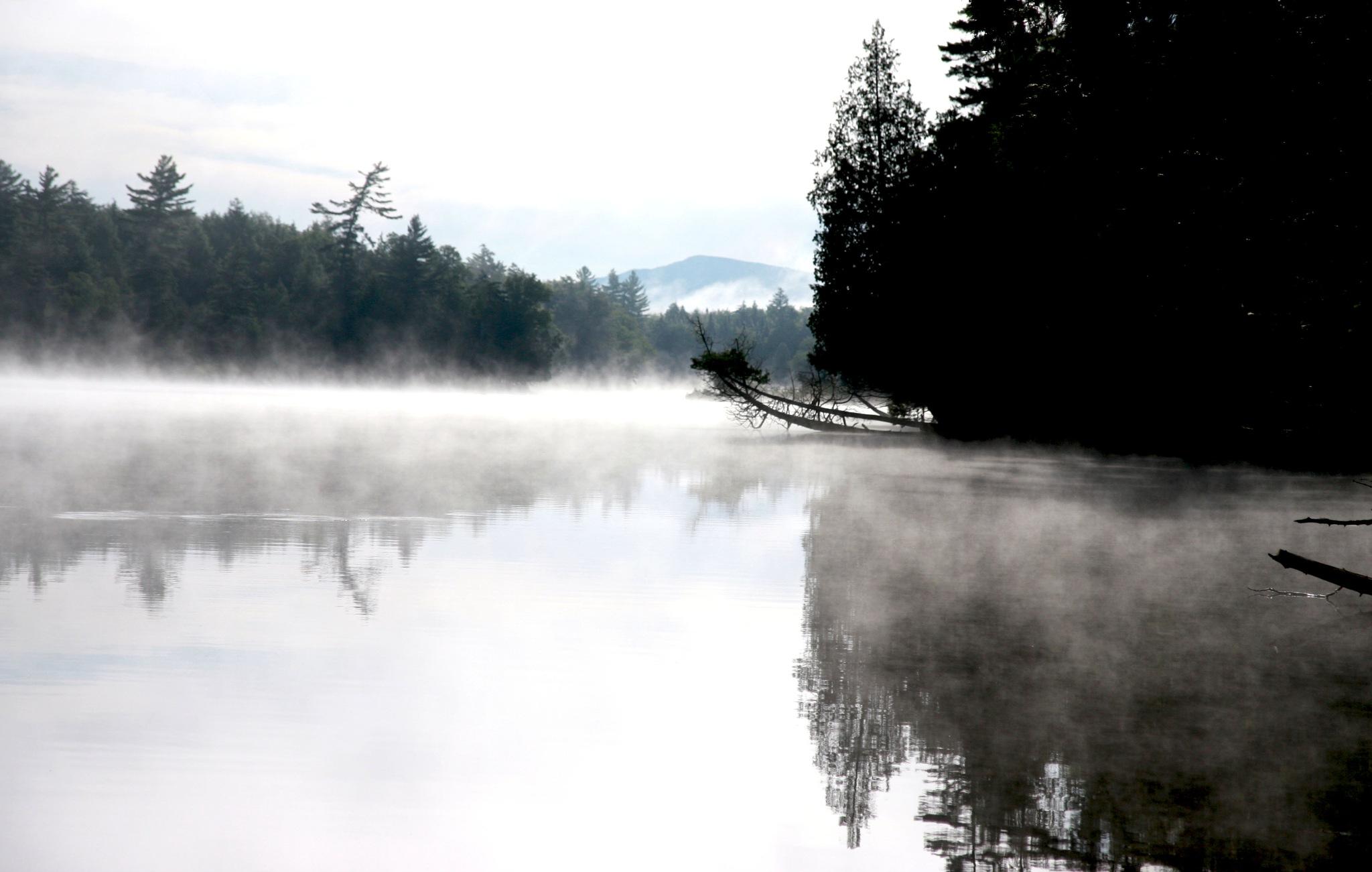 Morning Fog by Wendy Farrington