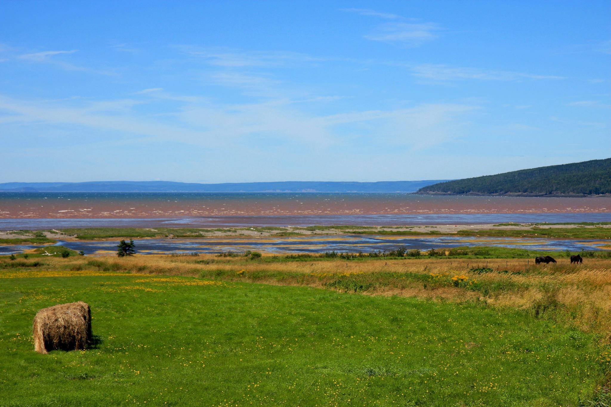 Nova Scotia Rural Shoreline Along the Bay of Fundy by Wendy Farrington