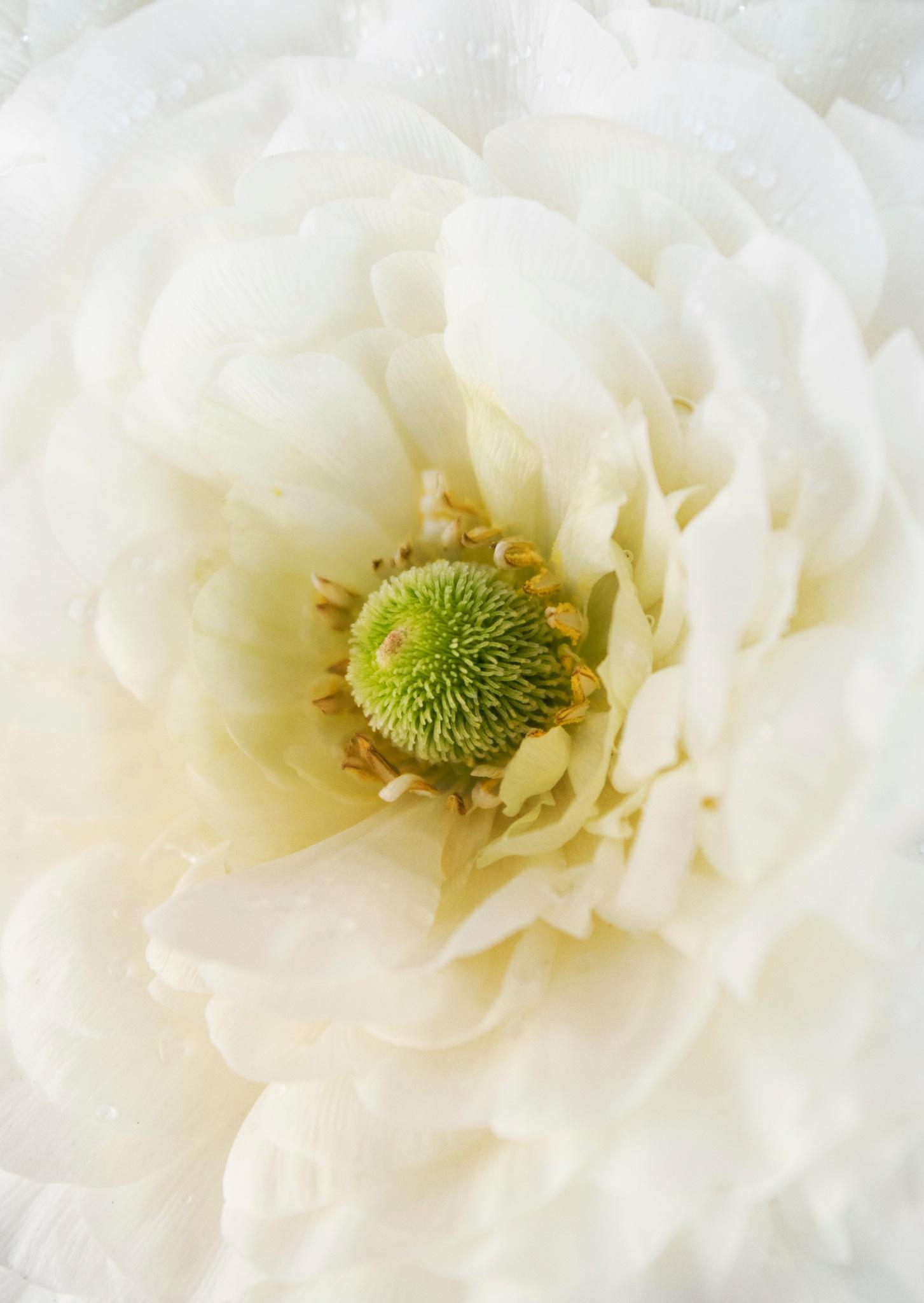 Wedding Flower by Amanda O'Halloran
