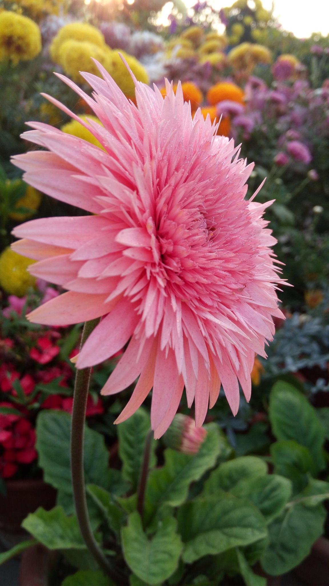 Full Bloom by tkmyspmtm