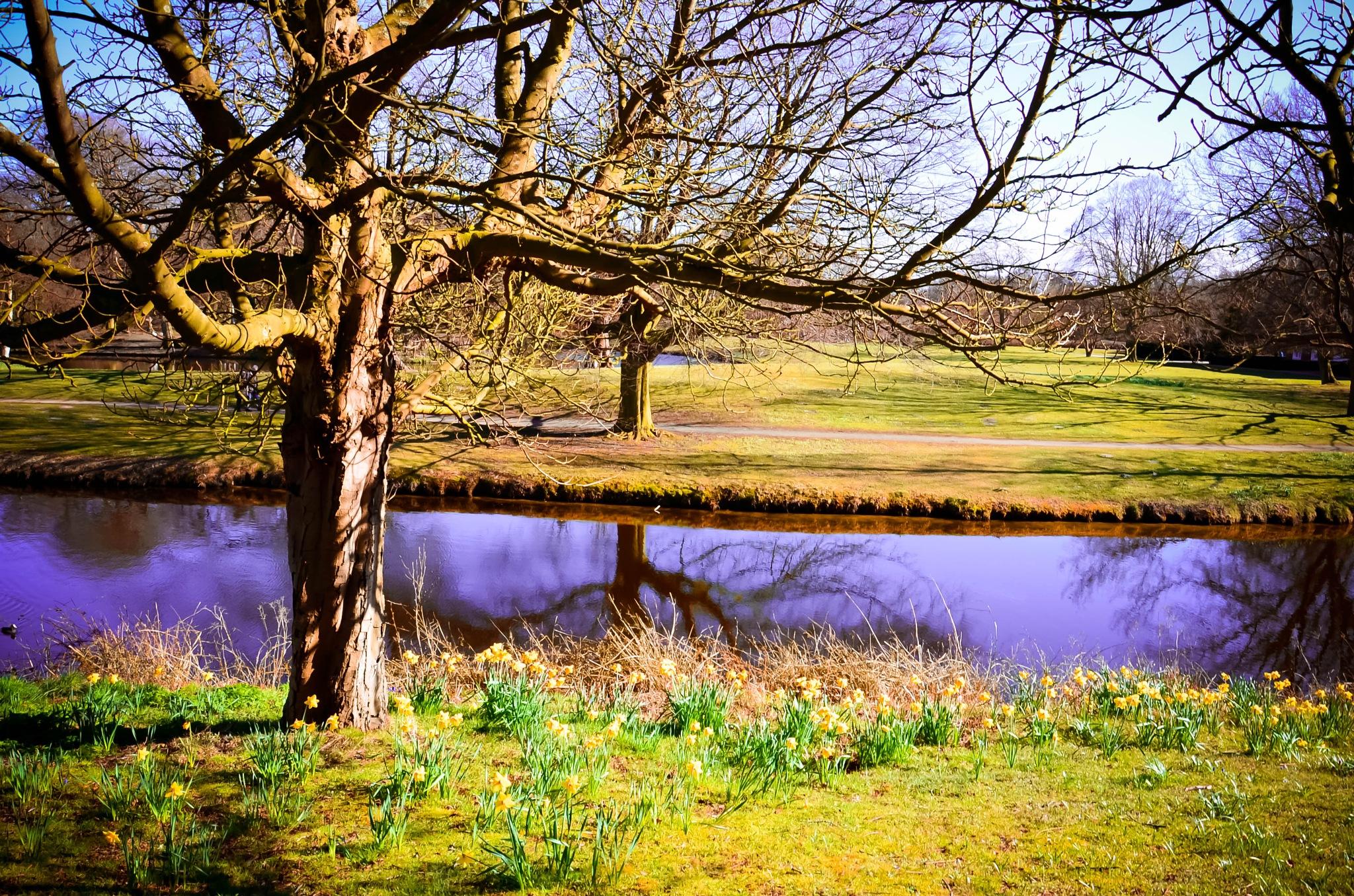 springtime in the park by Cristina Loghin