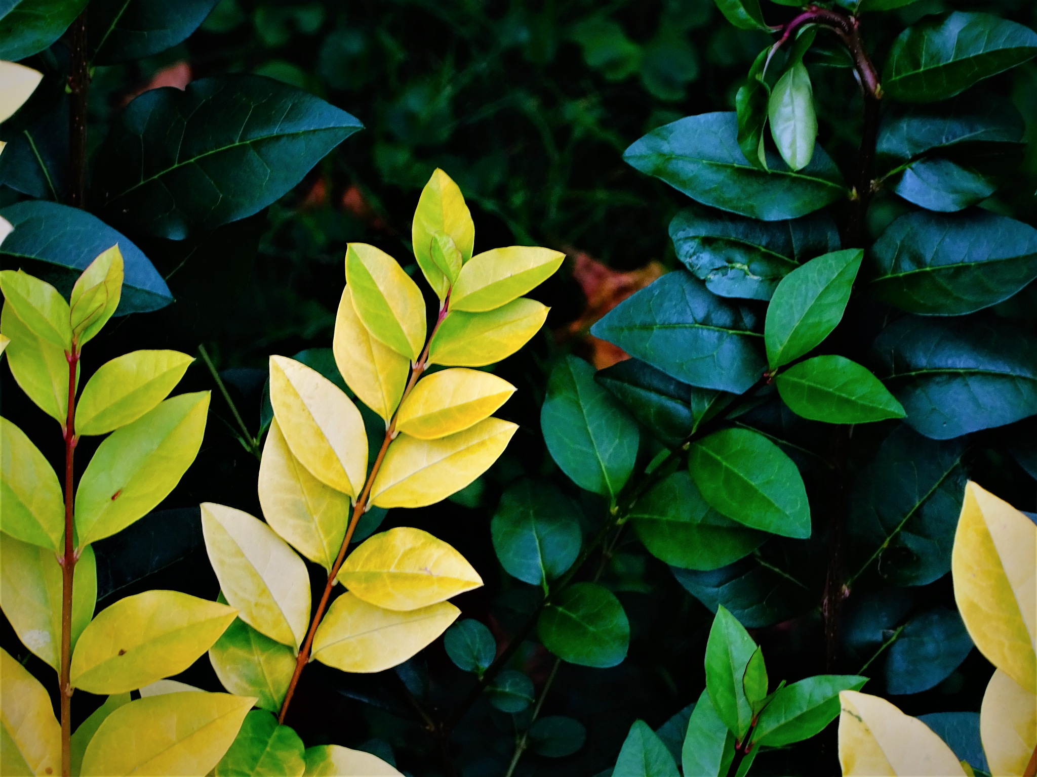 autumn greens by Cristina Loghin