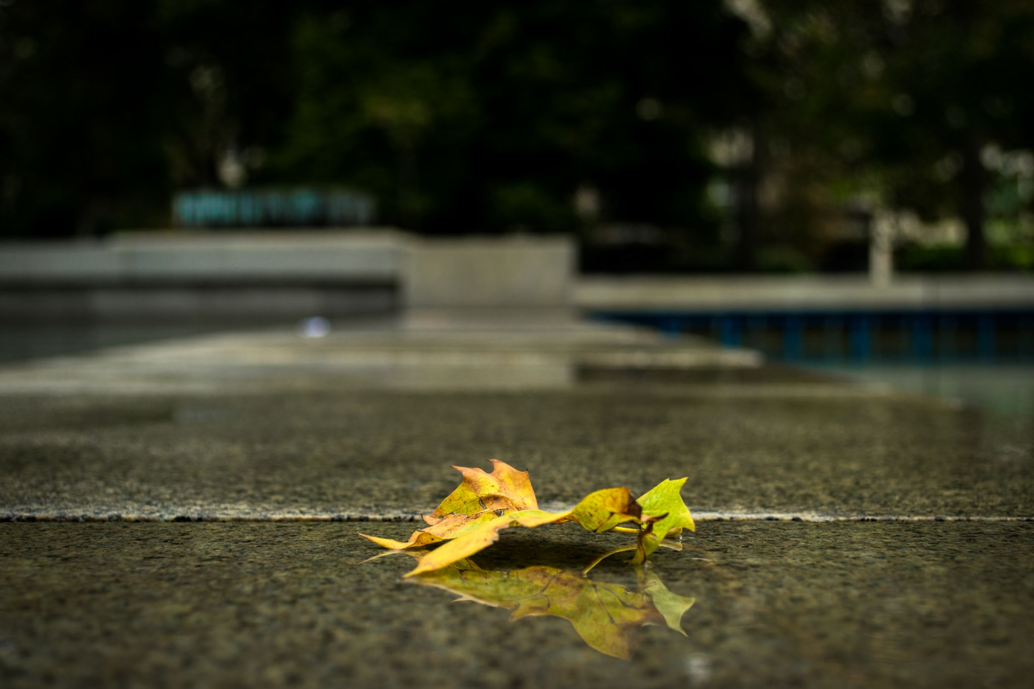 summer becomes a fall by Milen Kolev