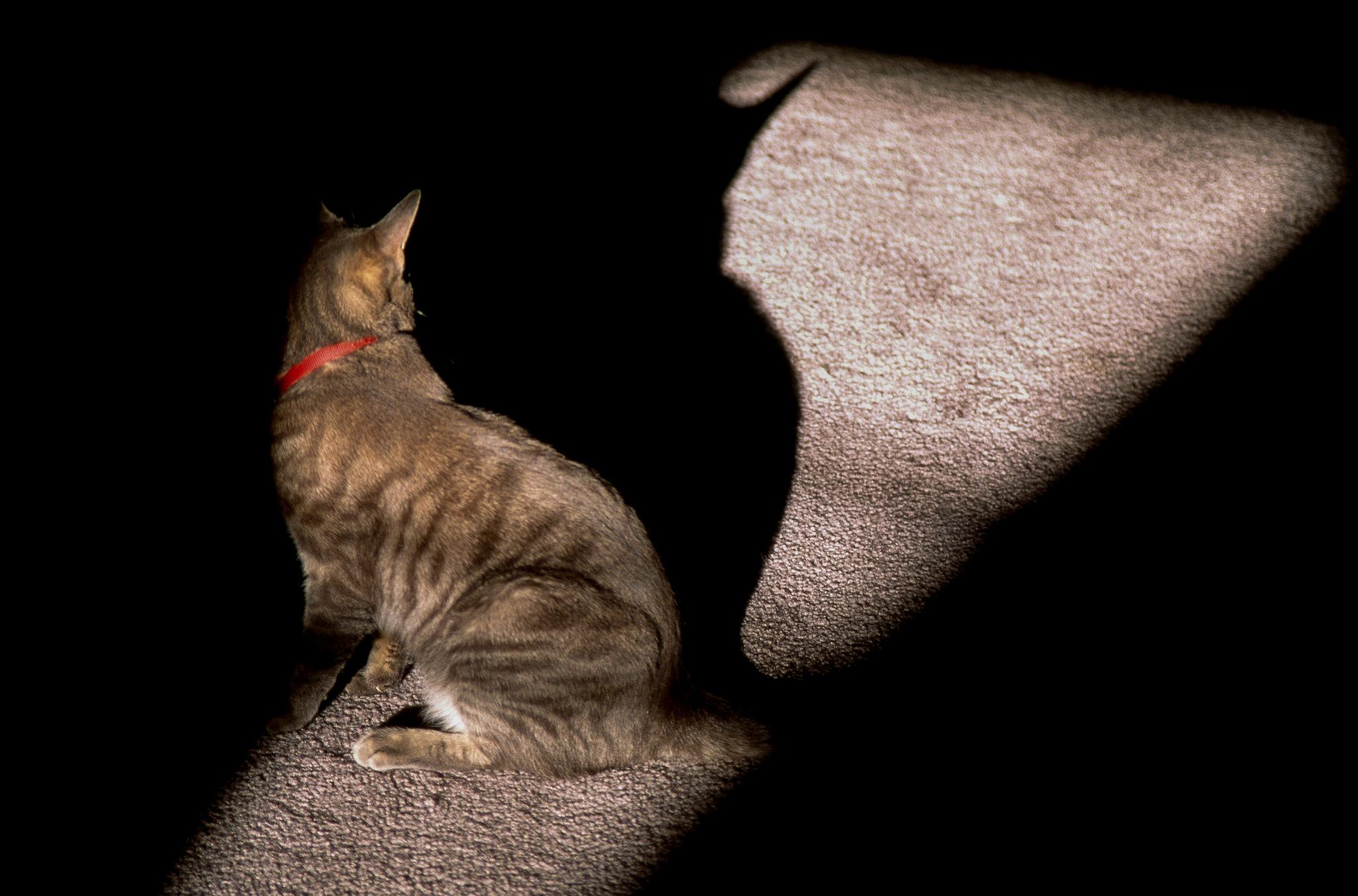 Bat-Cat! © Copyright 2017, Verne Varona by VerneVarona