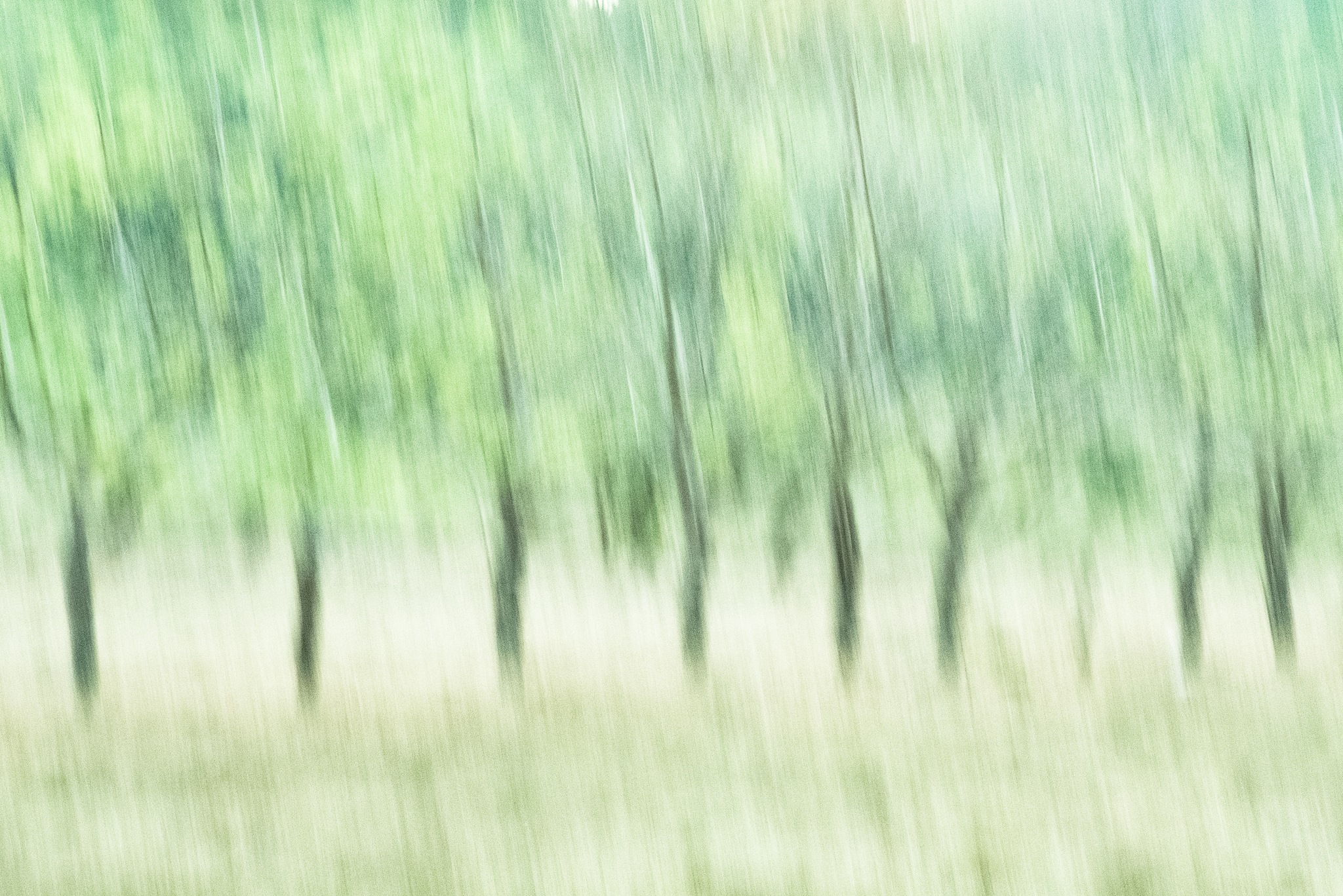 Dream Tree Abstract © Copyright 2018, Verne Varona by VerneVarona