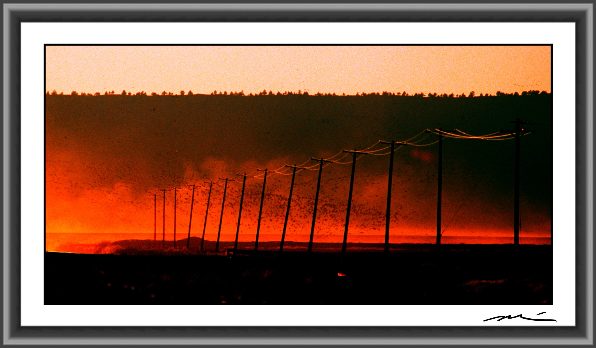 Bird Sanctuary Burn Off by Michael D. Davis