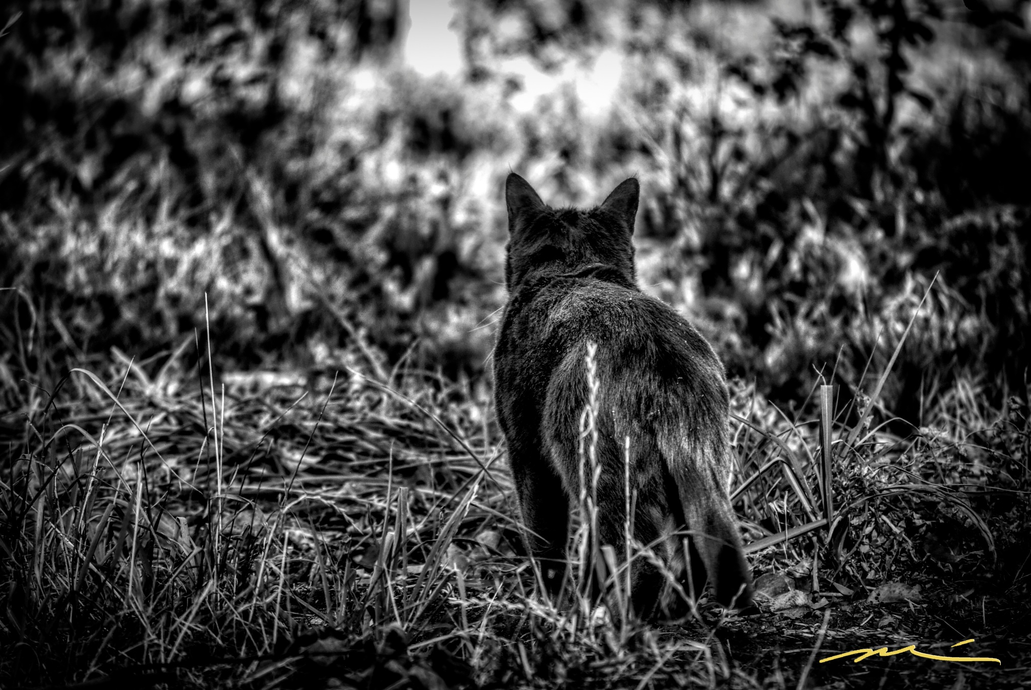 On The Prowl by Michael D. Davis