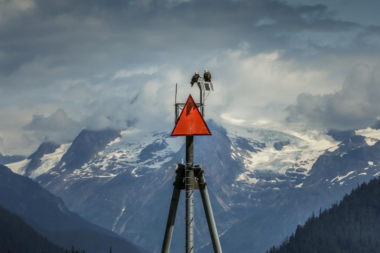 Eagles observing the alaskan landscape  by Martina Birnbaum