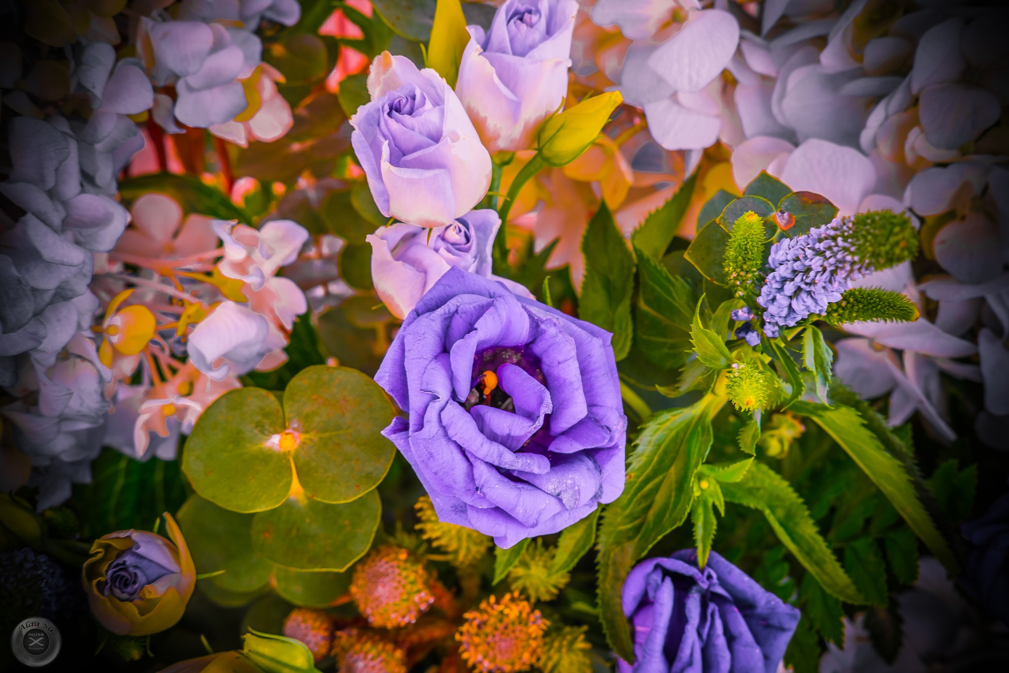 purple Rose  by Alaa Su