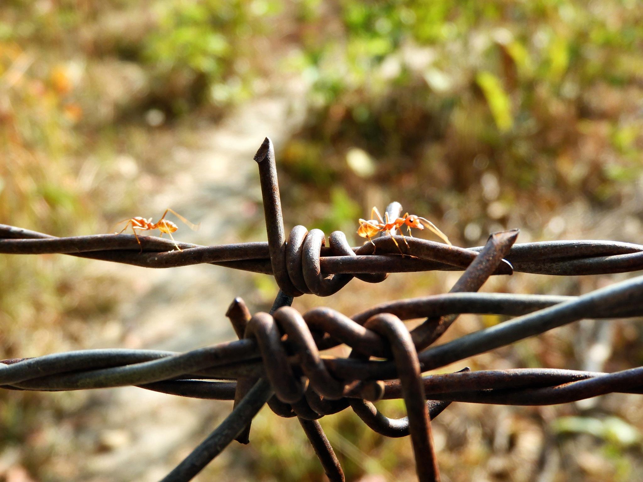 red ants by Henny van Broekhoven