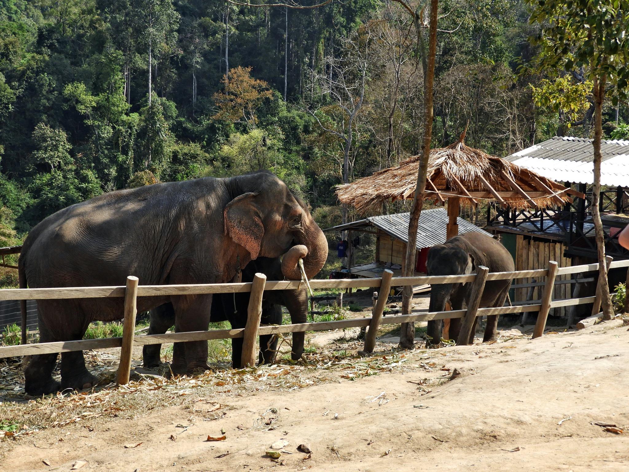 elephants by Henny van Broekhoven