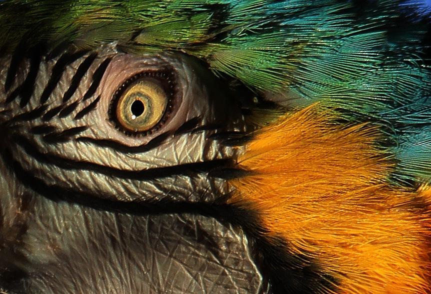 The eye  by Stephanie Veronique