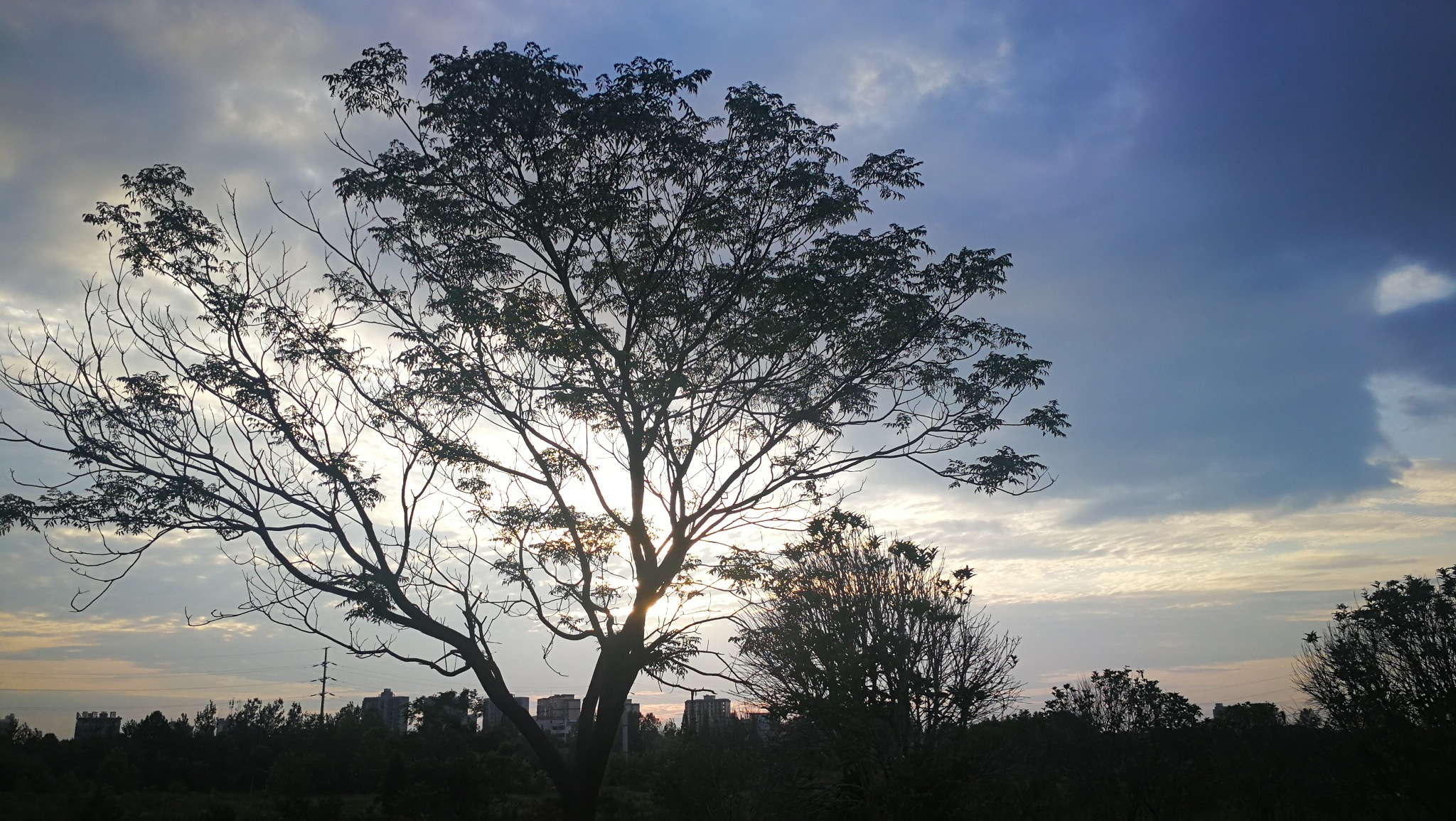 Dusk twilights on Branches  by Studio89Fotos - 湖北武汉