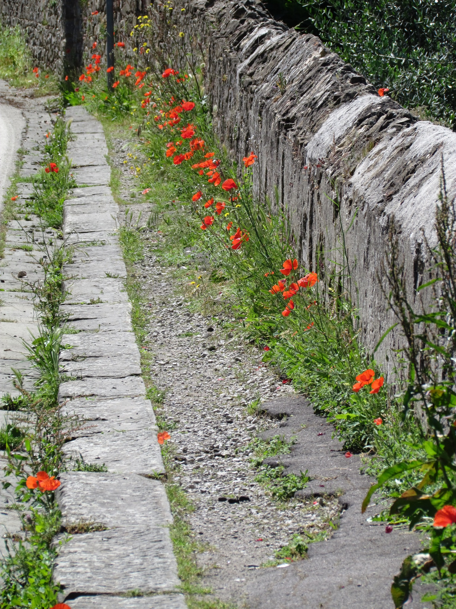 poppy wall by Jwalker292