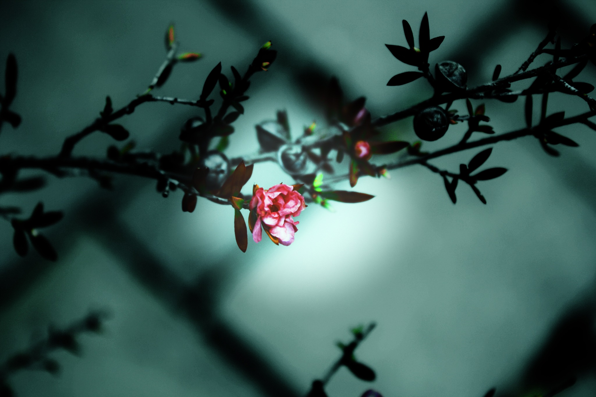 The Lone Blossom by pua