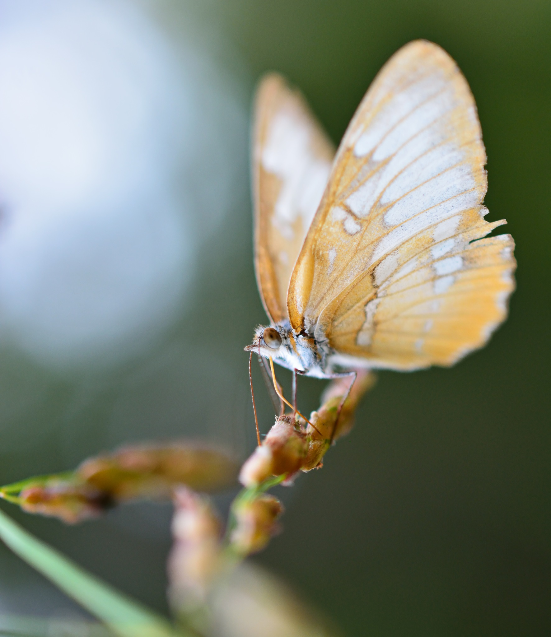 Butterfly Balance by Abraham Zepeda
