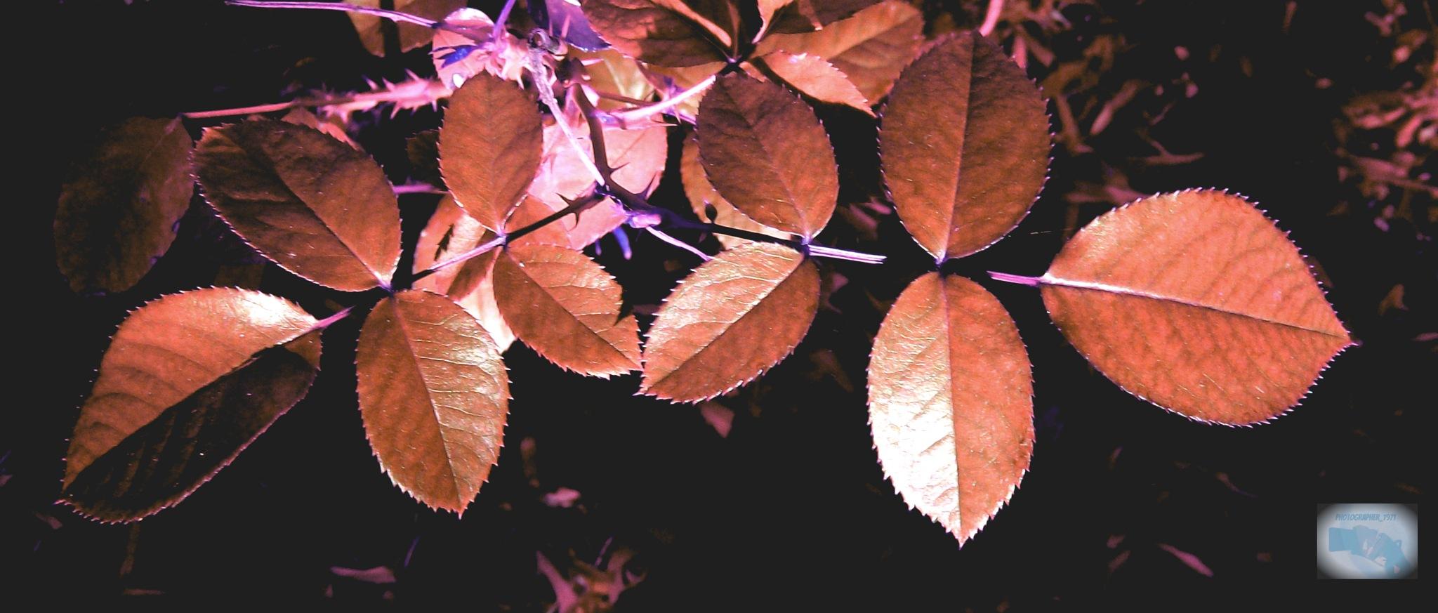 Autumn in ocher by photographer_1971