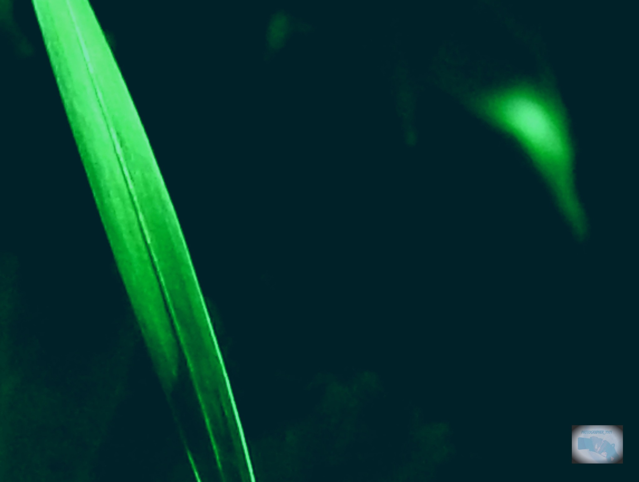 Subtle Green by photographer_1971