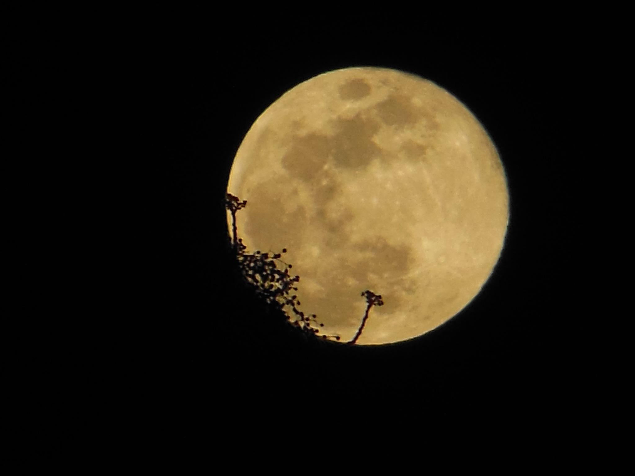 Allo la Lune  by SofianeAyssa