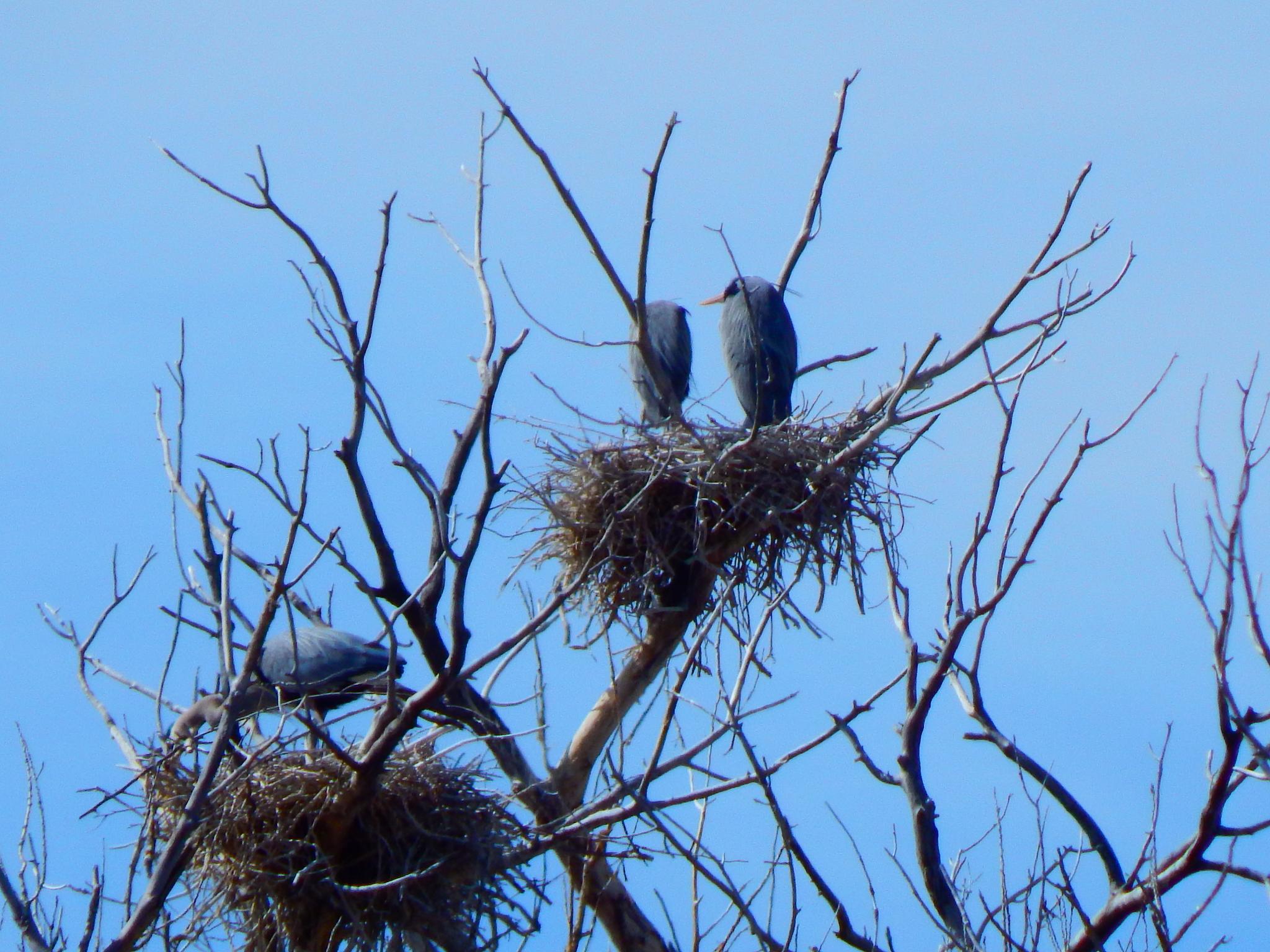Nesting Season by Mark Court (MyWyomingPhotography)