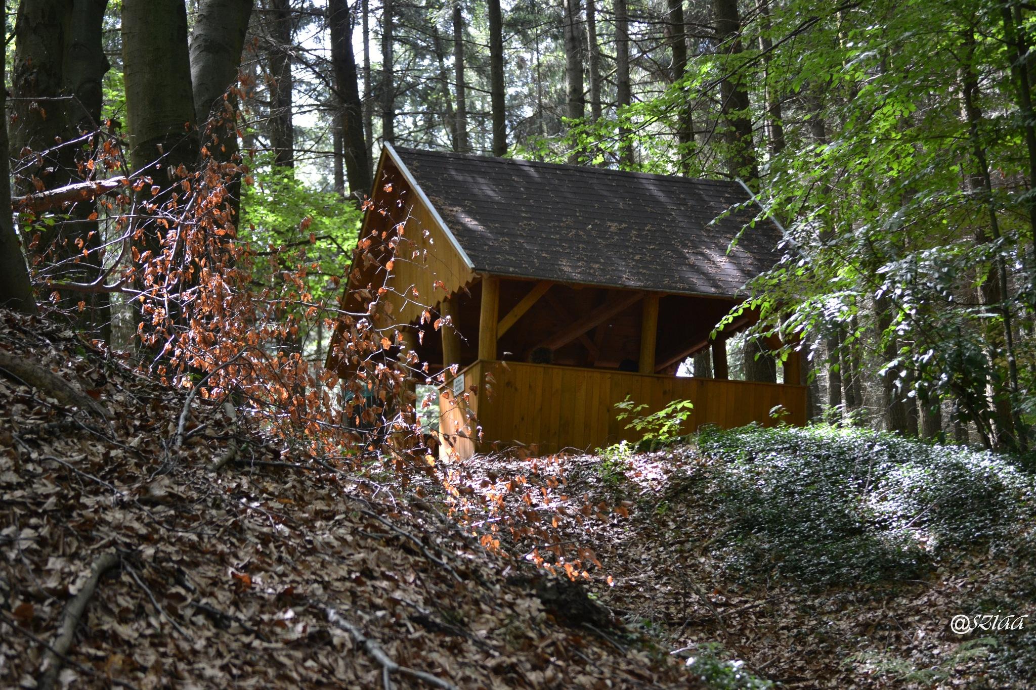 Kám, Jeli Arborétum, természetvédelmi terület by sziaa