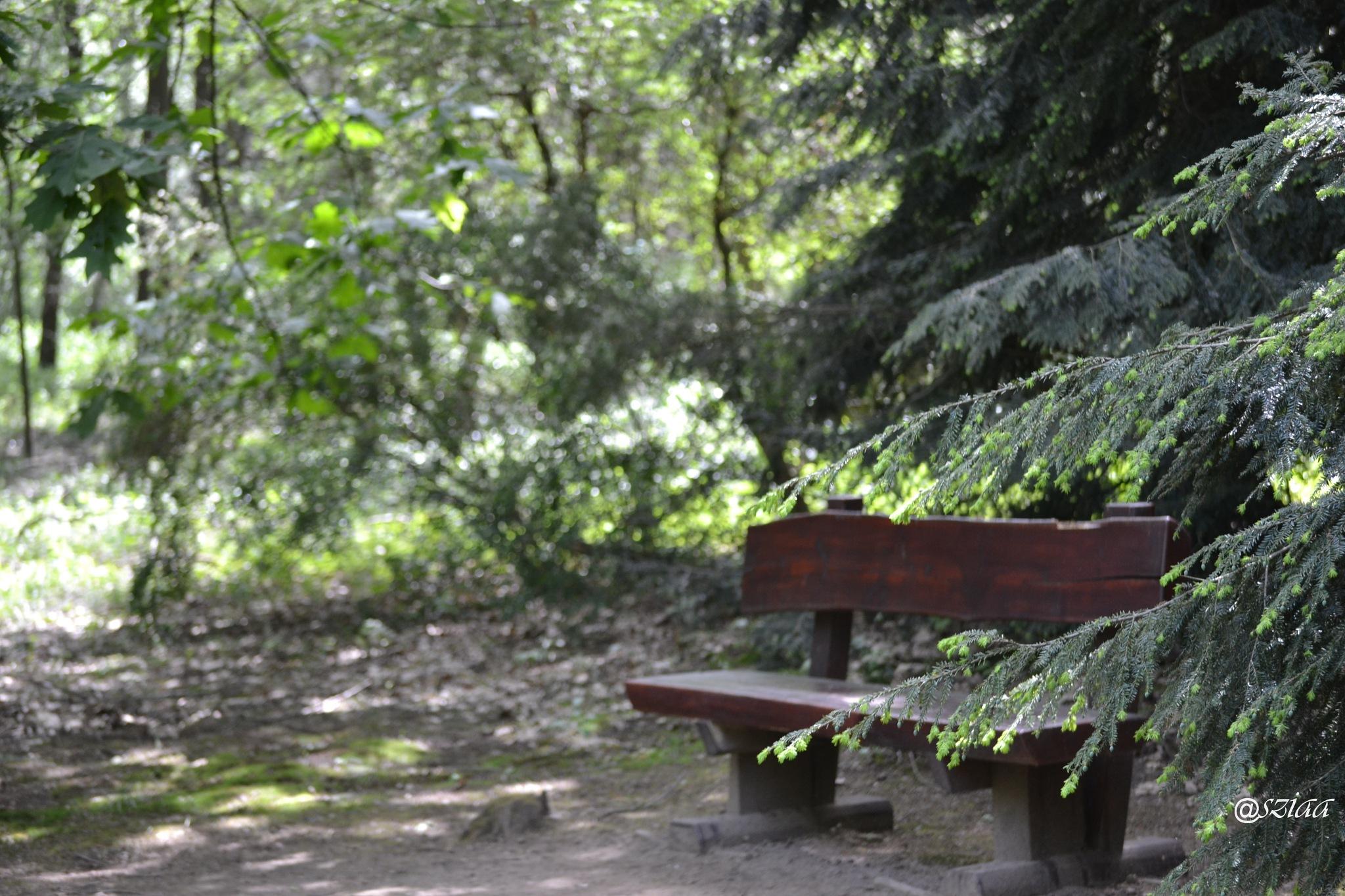 Kám, Jeli Arborétum by sziaa