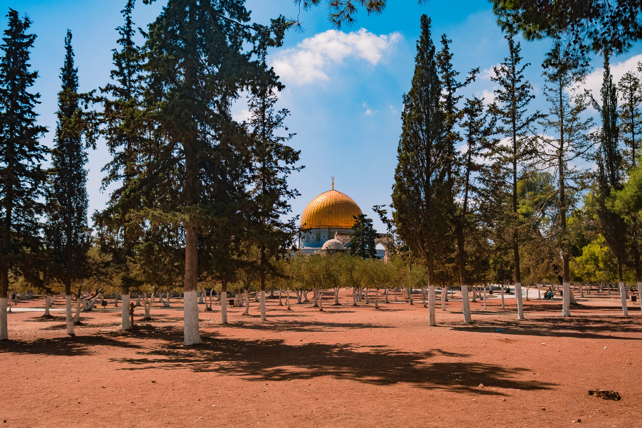 Aqsa and tree by Yaser Naserideen