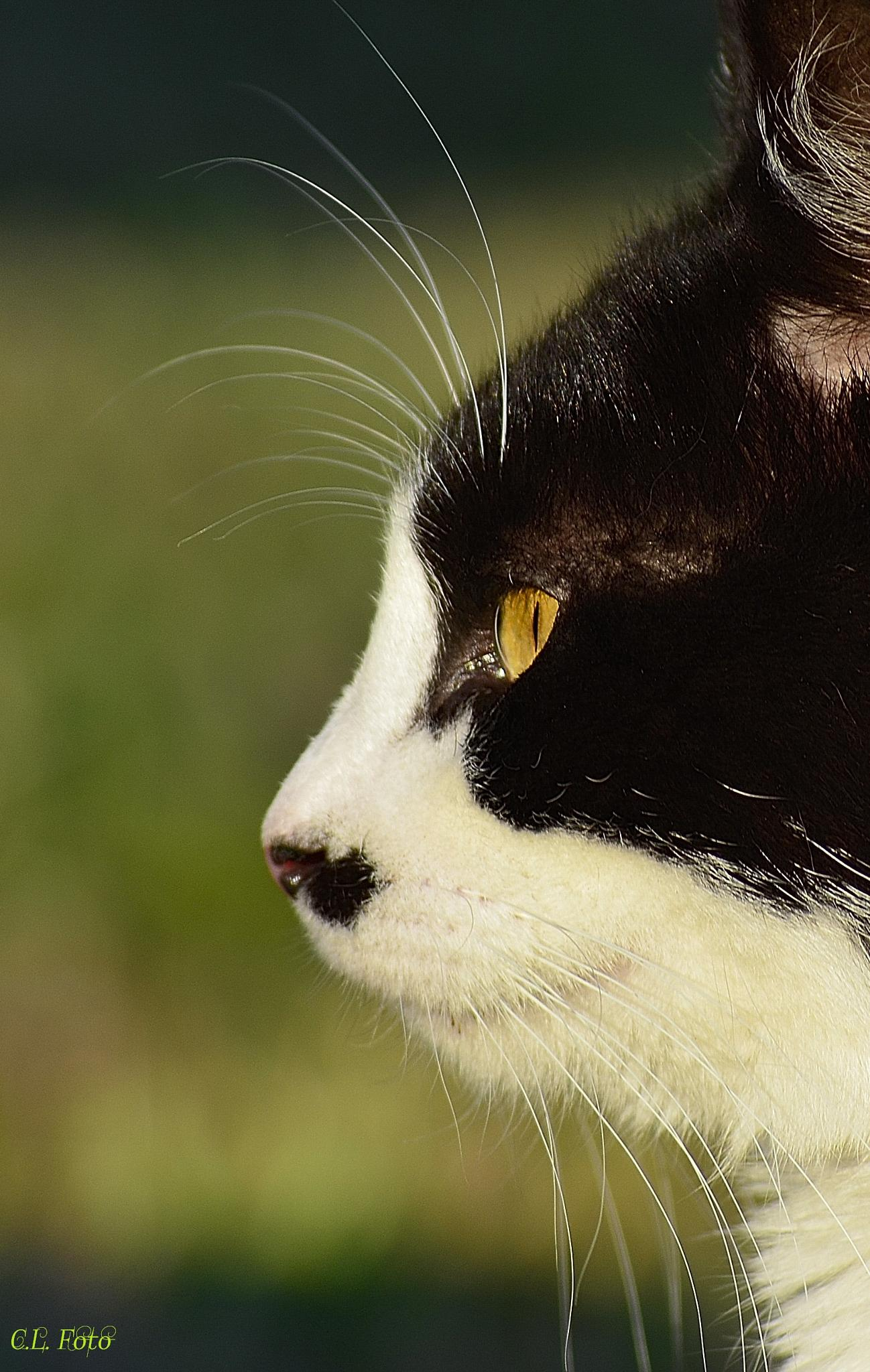 Cat 2 by Lorenza Costa