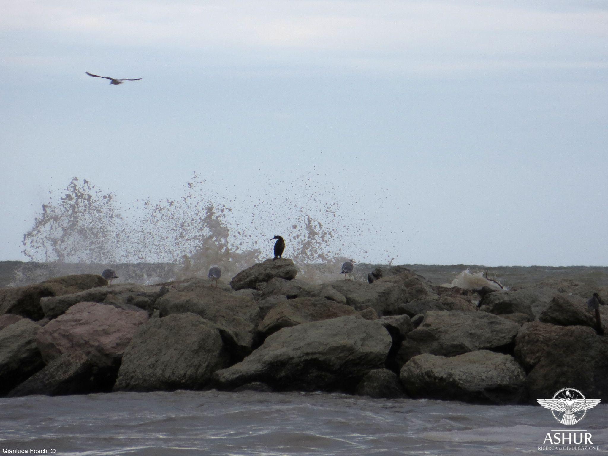 Jonathan Livingston Seagull by Gianluca Foschi