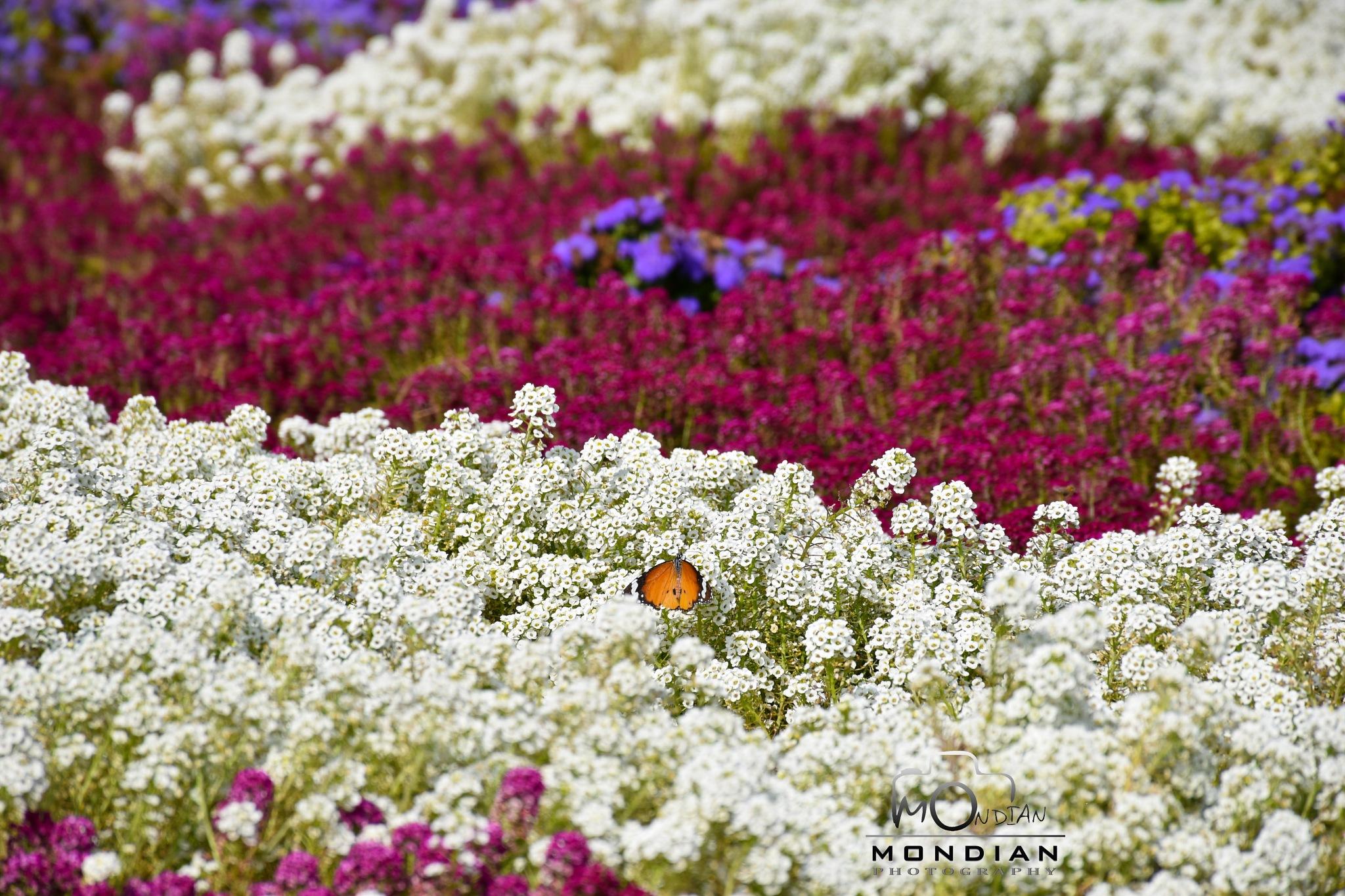 orange is the warmest color ! by Mohsen Ahmadian