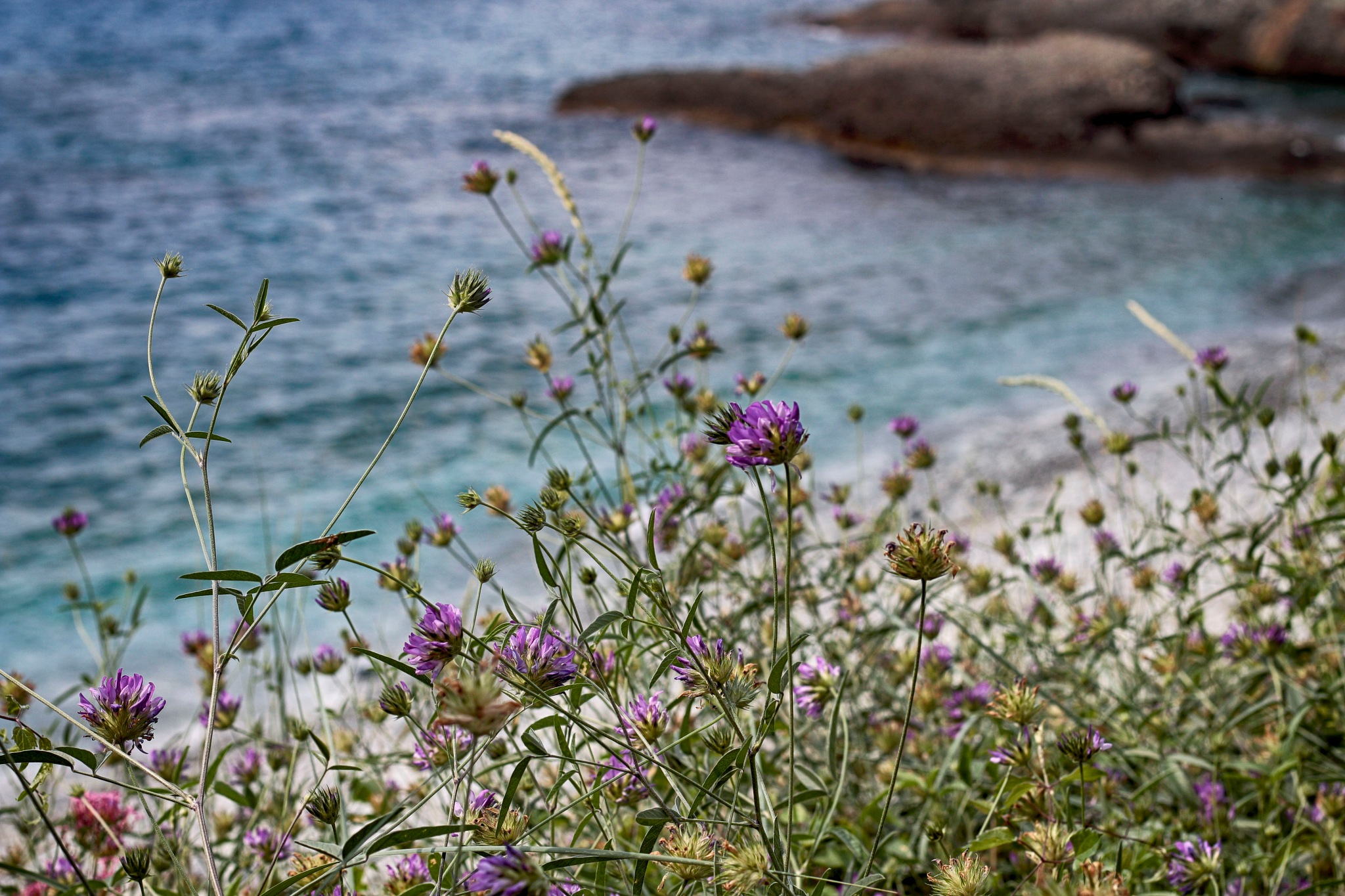 Flowers and sea 2 by marco58
