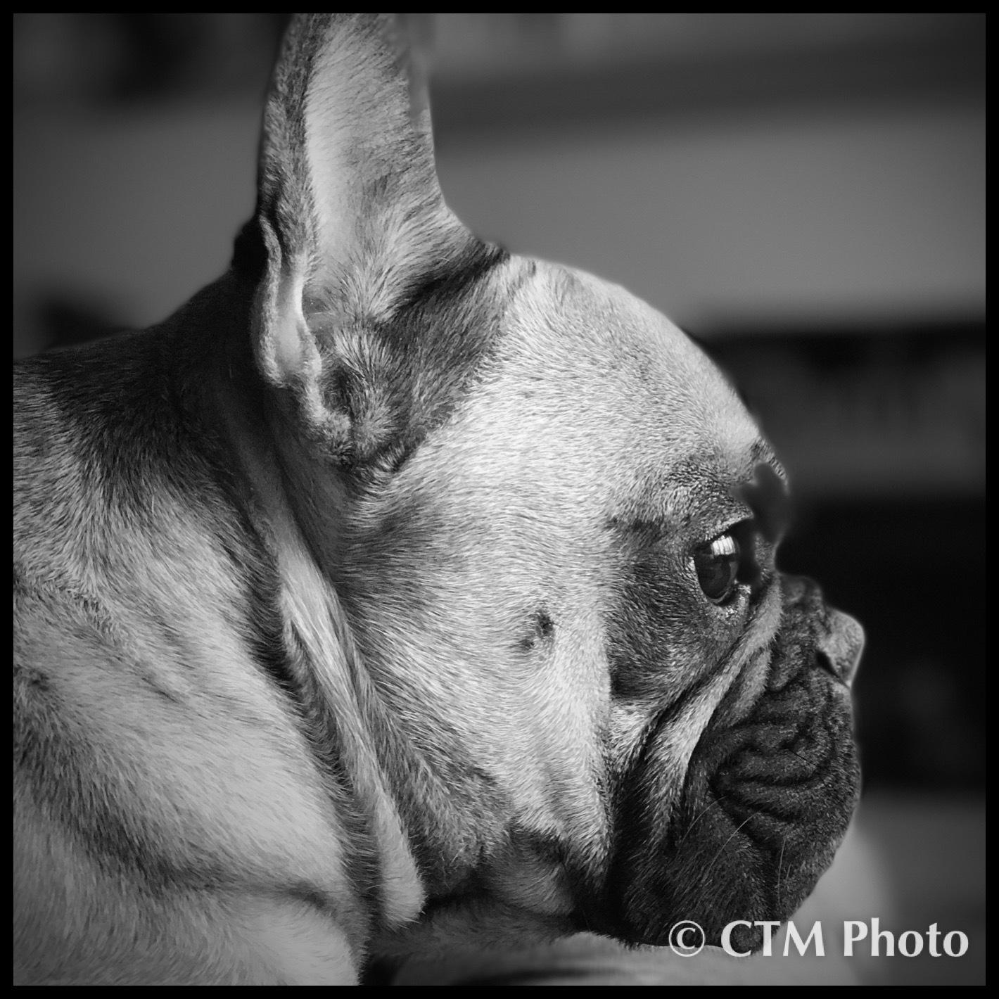 Bentley  by CTM Photo