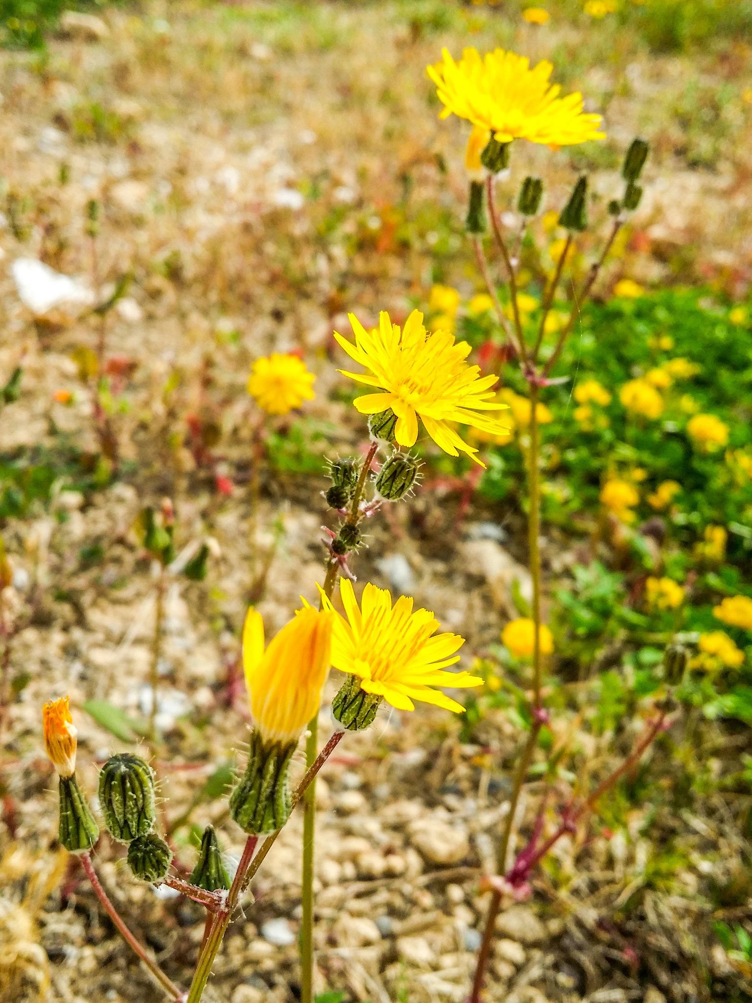 Flowers  by Monaam Ben Fredj