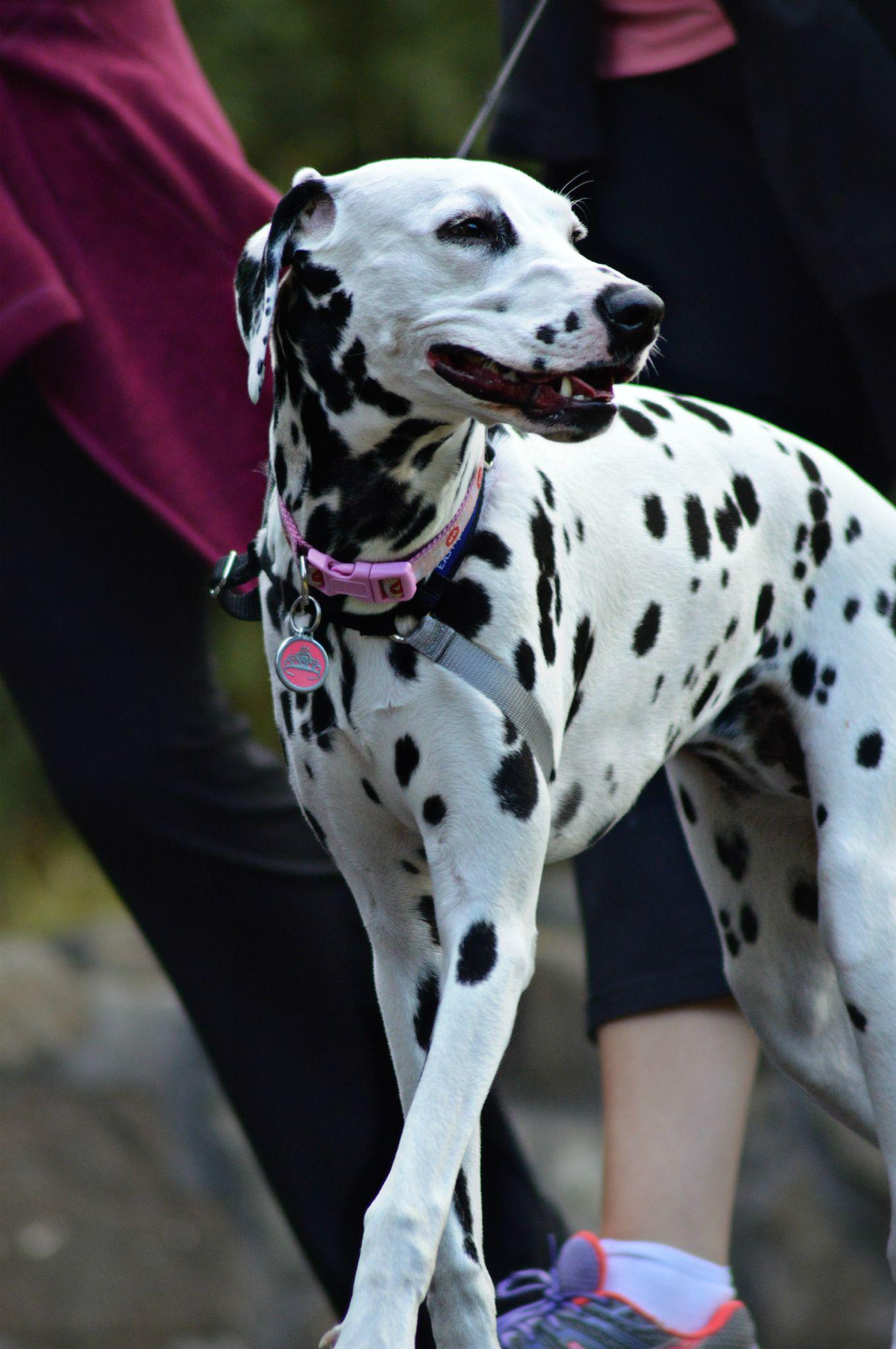 Spotty Dog by Sarah Haywood Photography