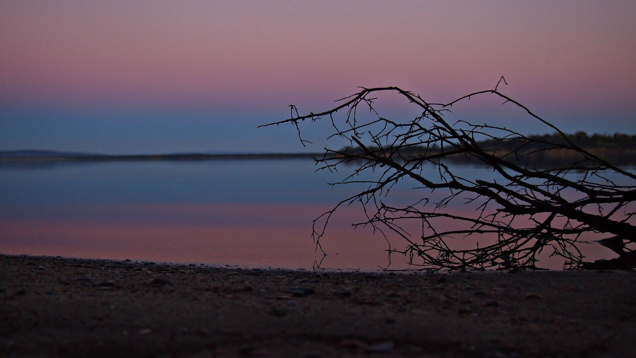 Reflective Pinks and Blue by Sarah Haywood Photography